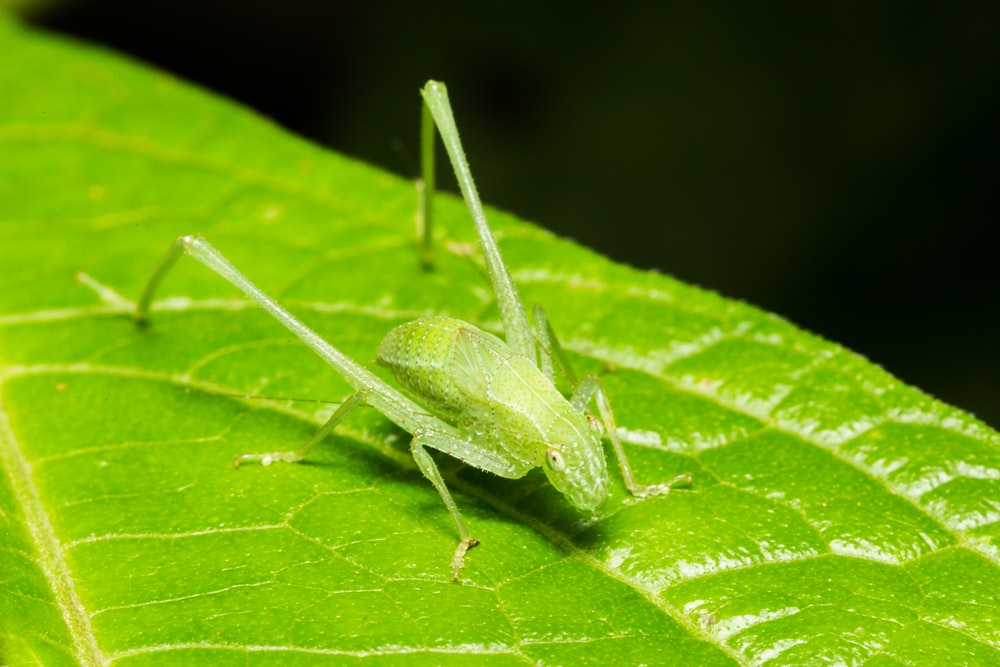 shallow focus photography of green grasshopper on leafed plant