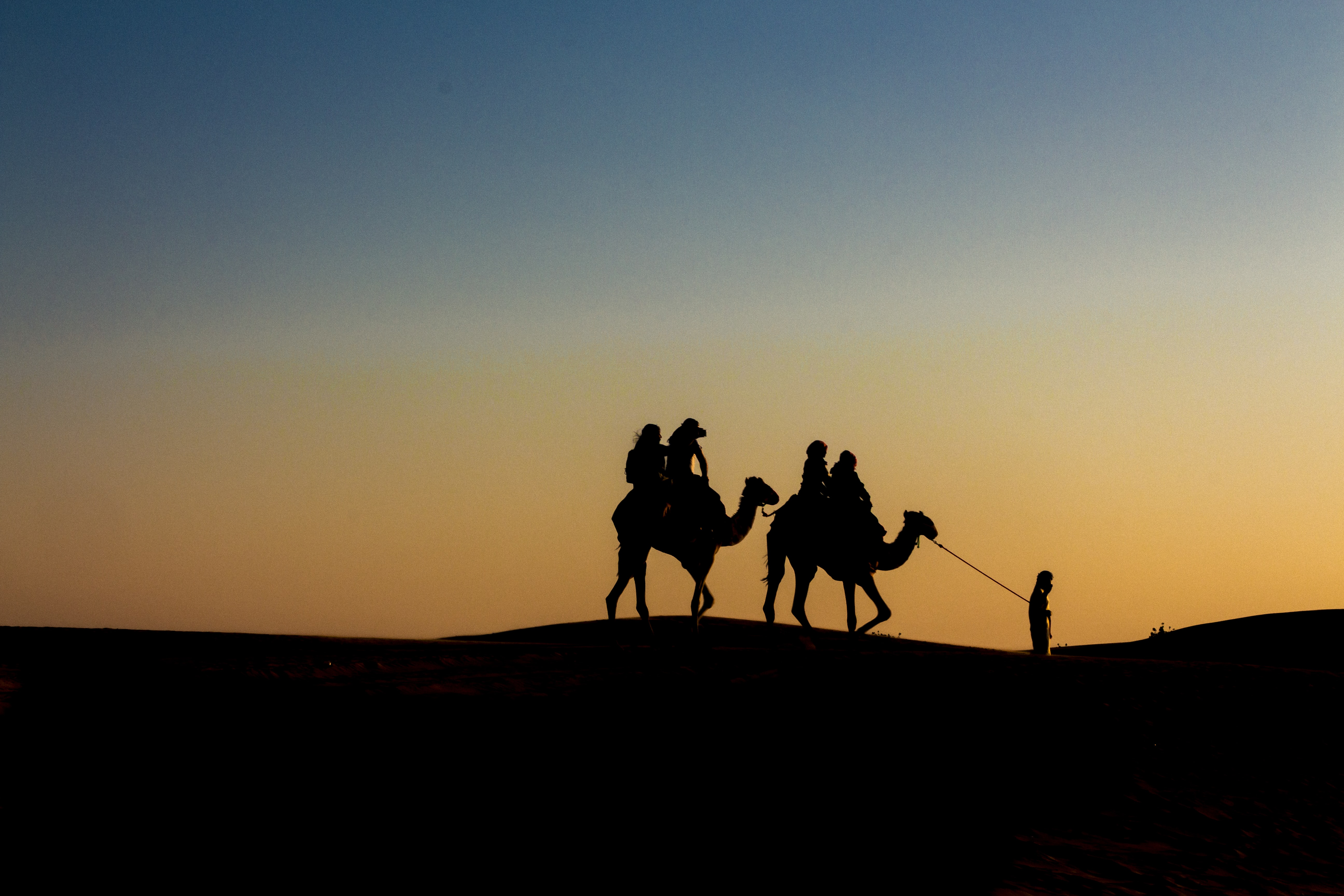 silhouette of people riding camels