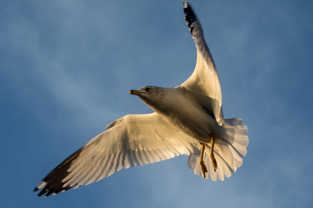 white and black bird flying under blue sky