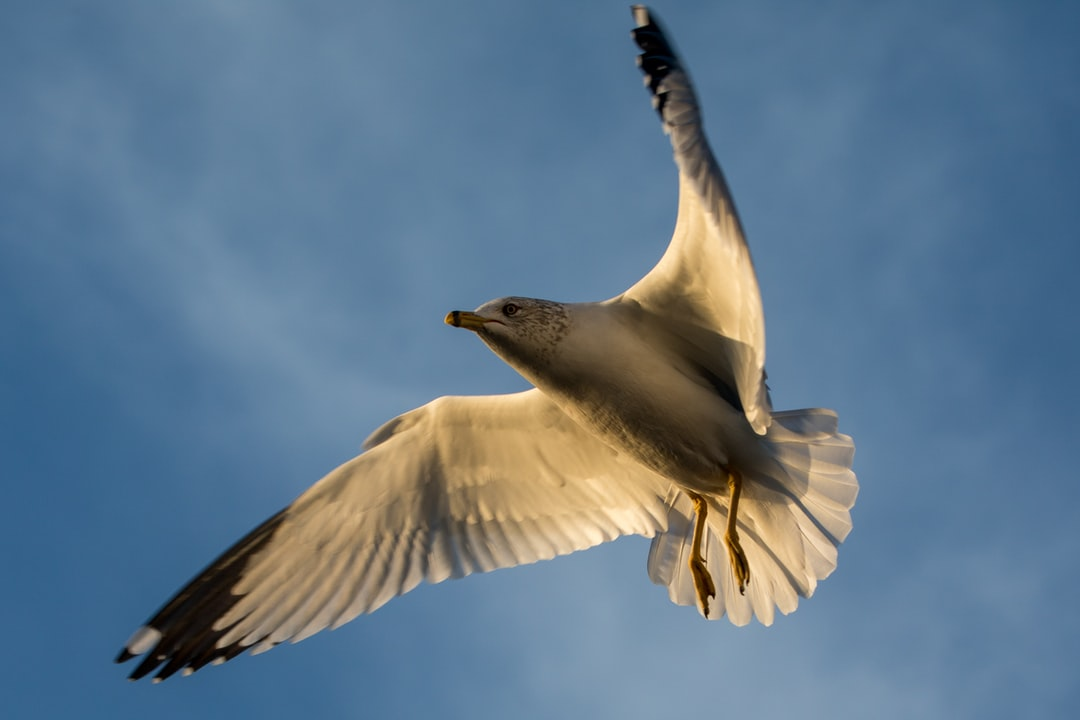 Gulls on a Winter Afternoon