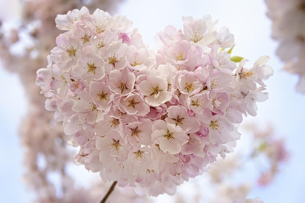 macro focus of pink flowers