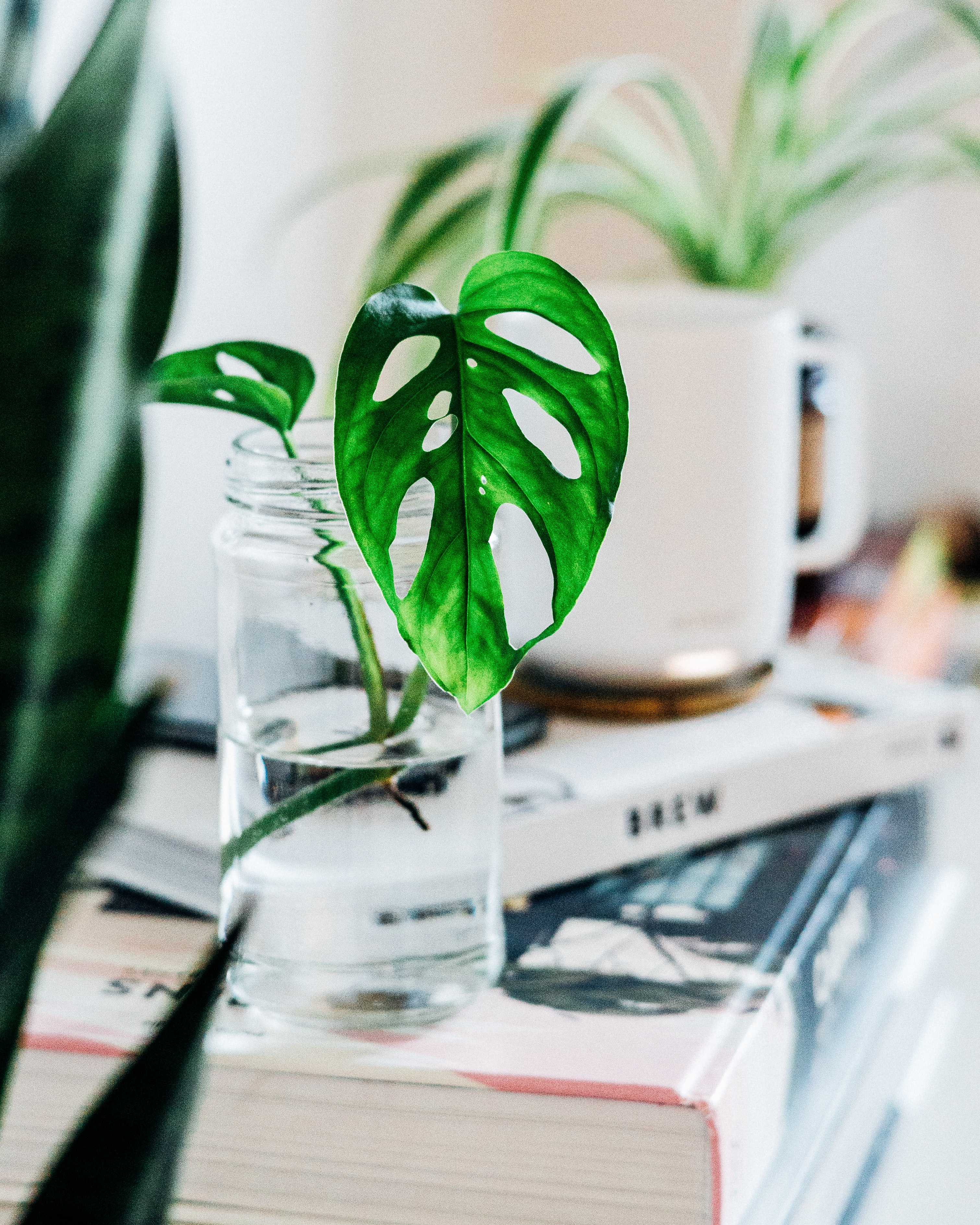 selective focus photography of leafed plant inside jar with water