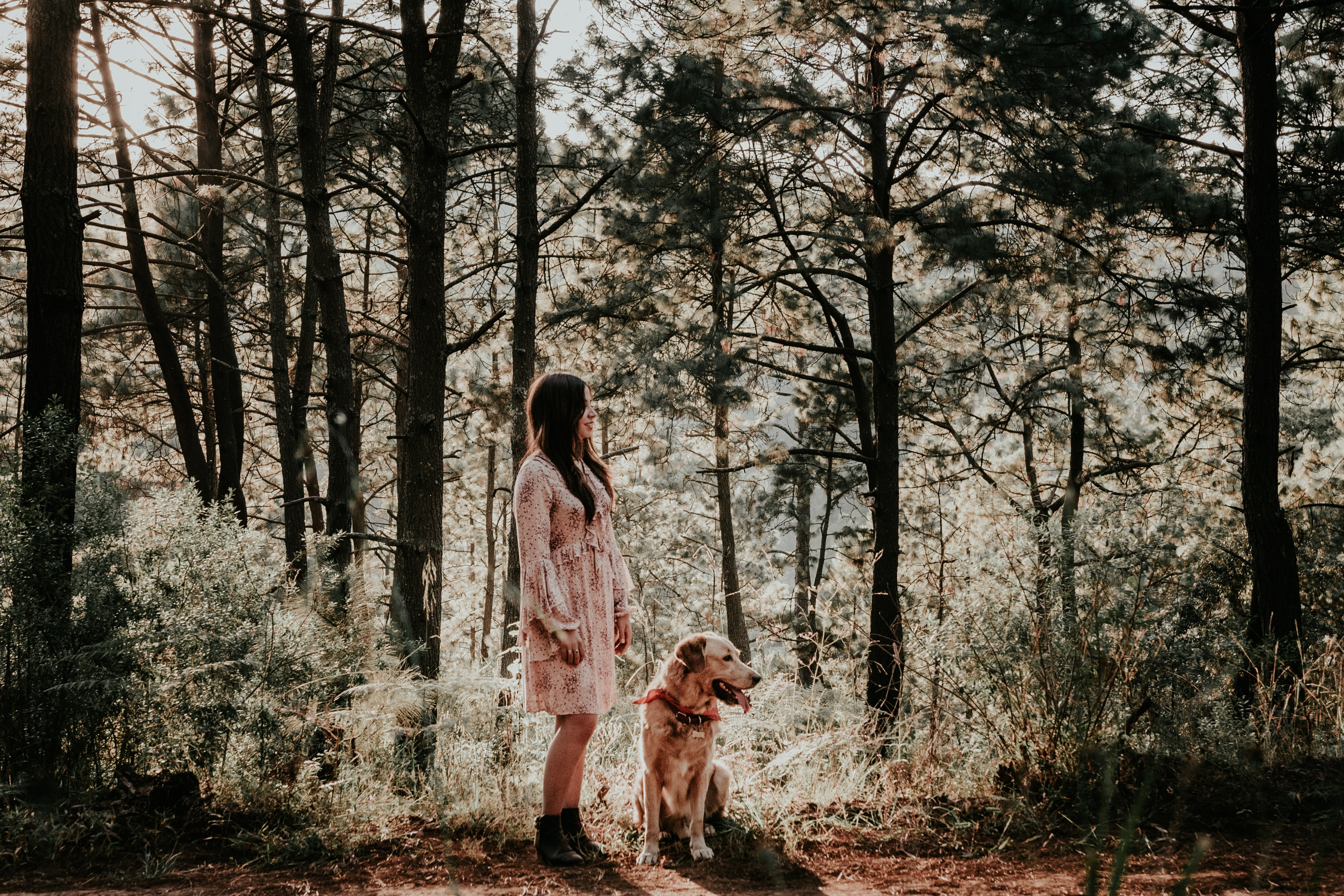 woman standing near brown dog under shade of trees during daytime