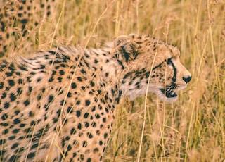 leopard near bushes