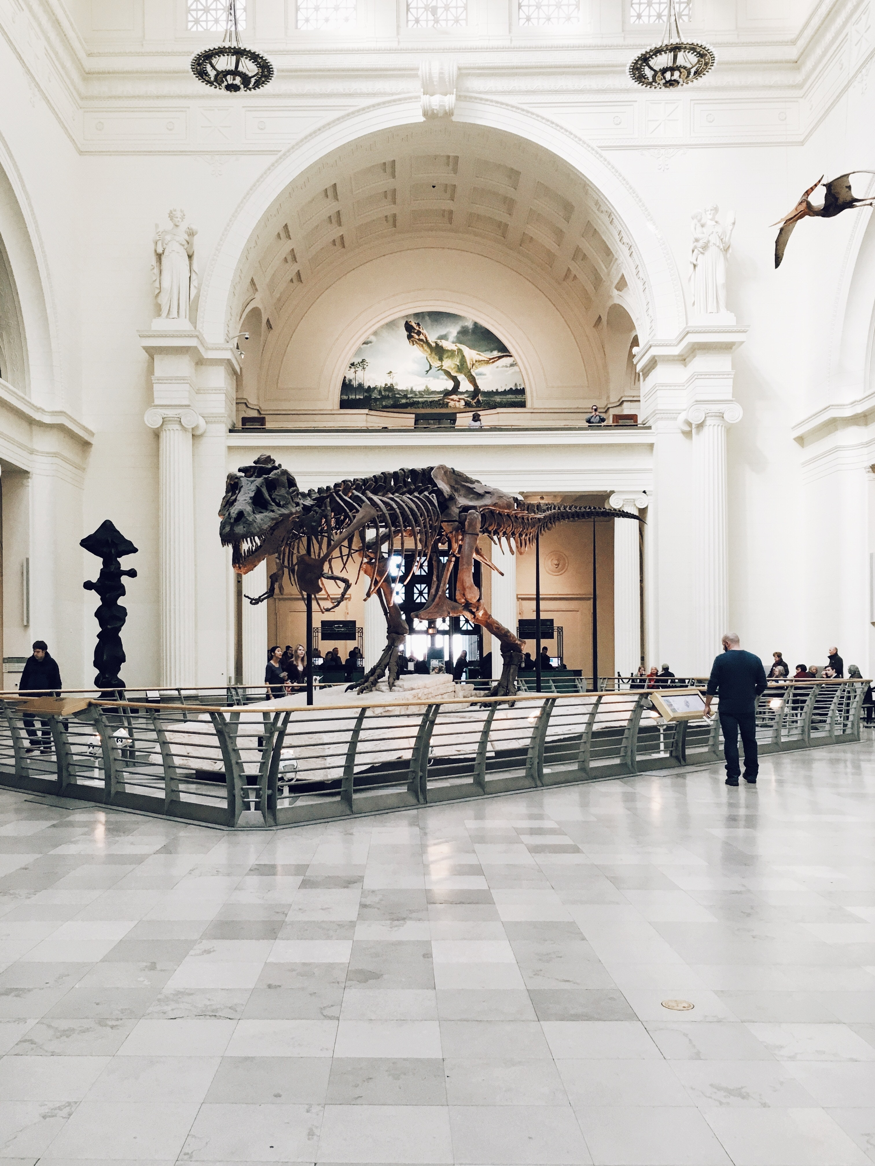 T-Rex skeleton inside a museum