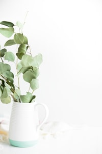 green plant potted on white ceramic vase