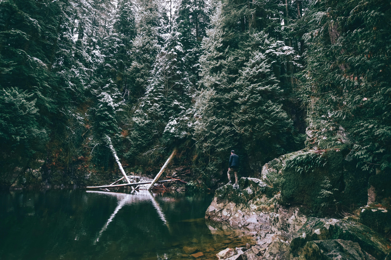 lake near green trees