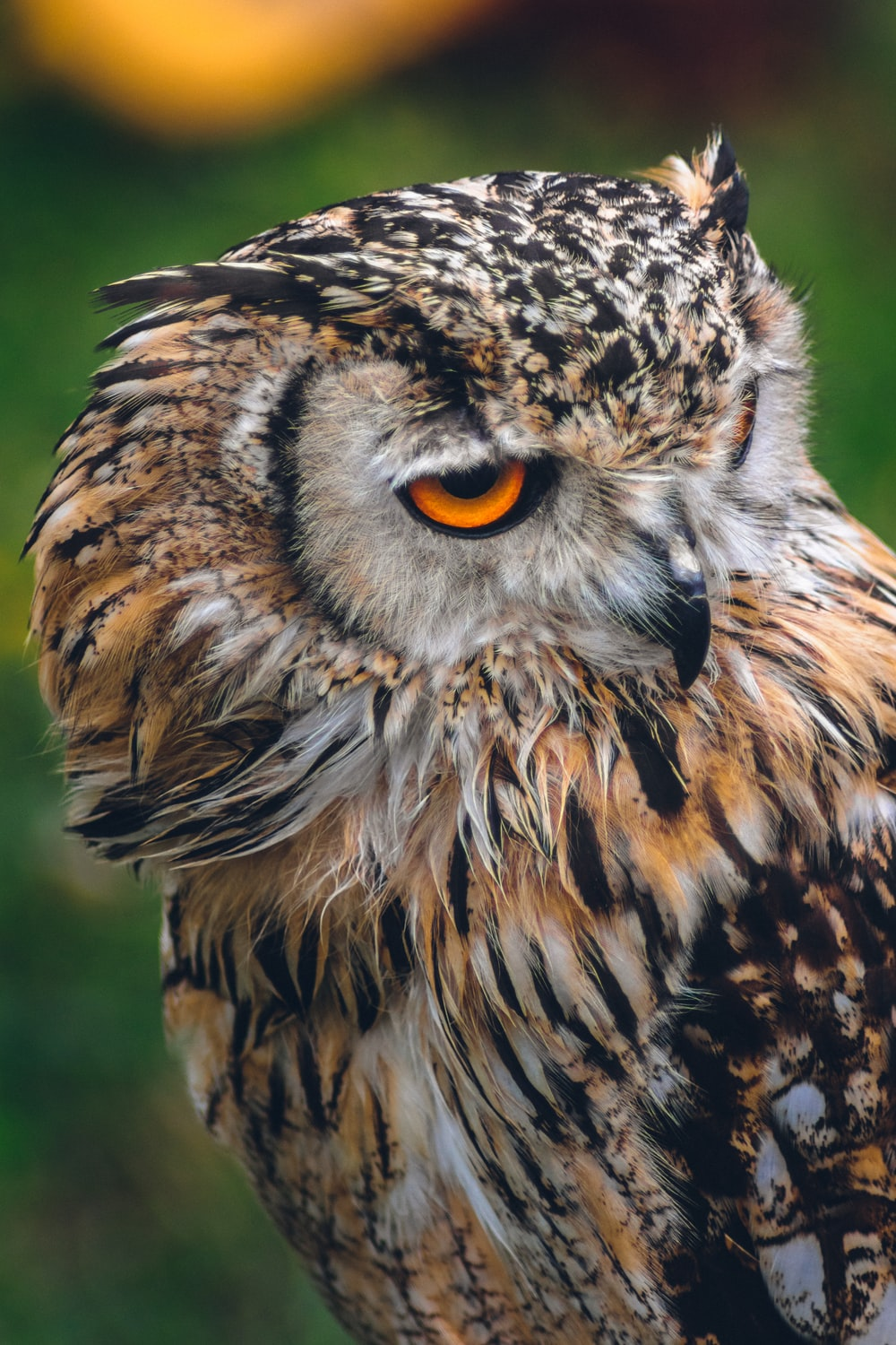 brown and black owl in bokeh photography