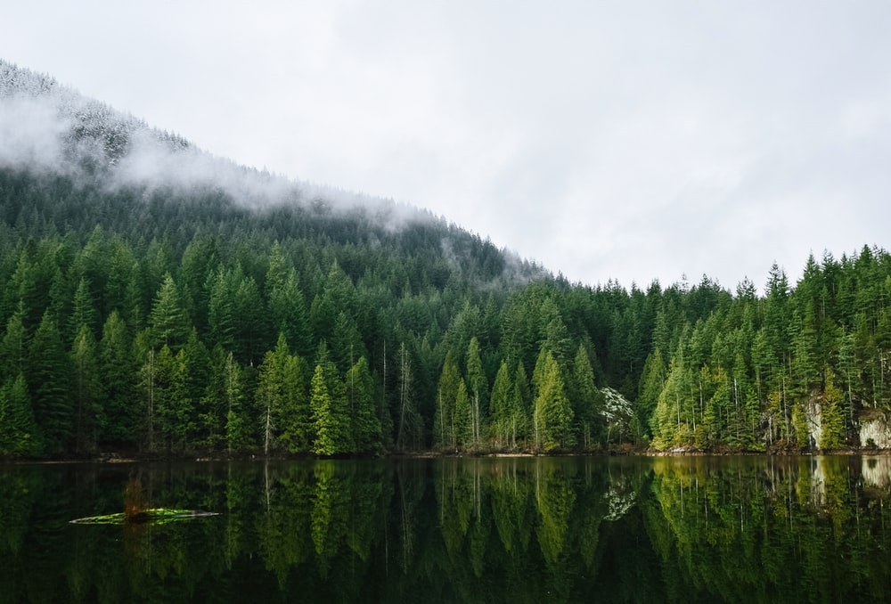 calm body of water near forest