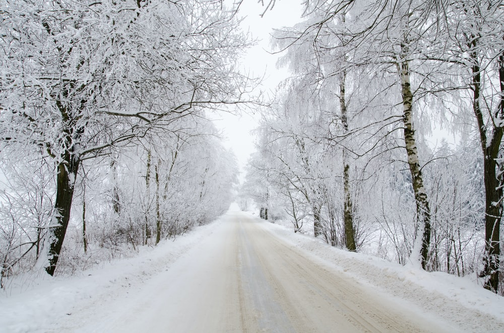 landscape photography of asphalt road surrounded by snow-covered trees