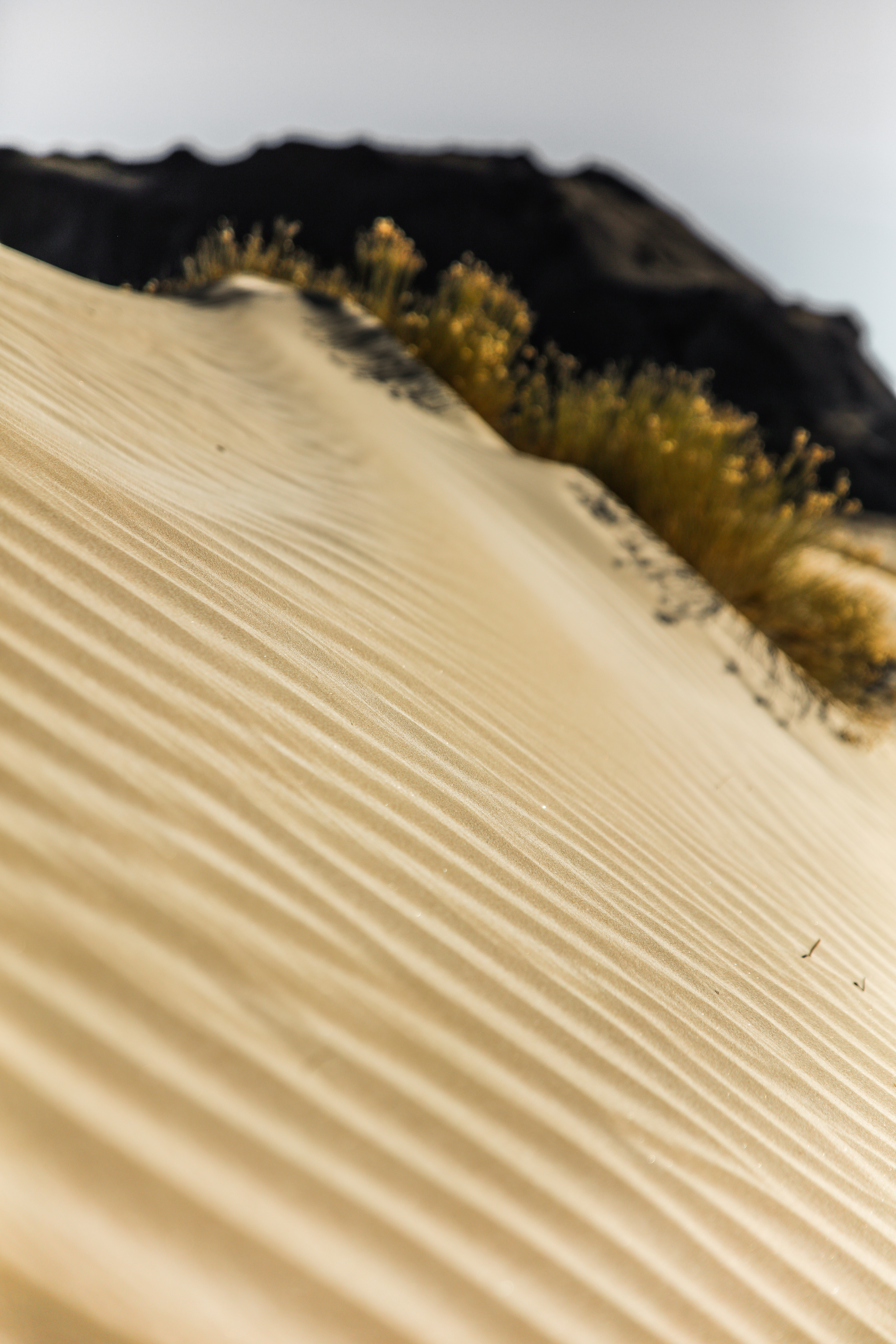 selective focus photography of brown sand