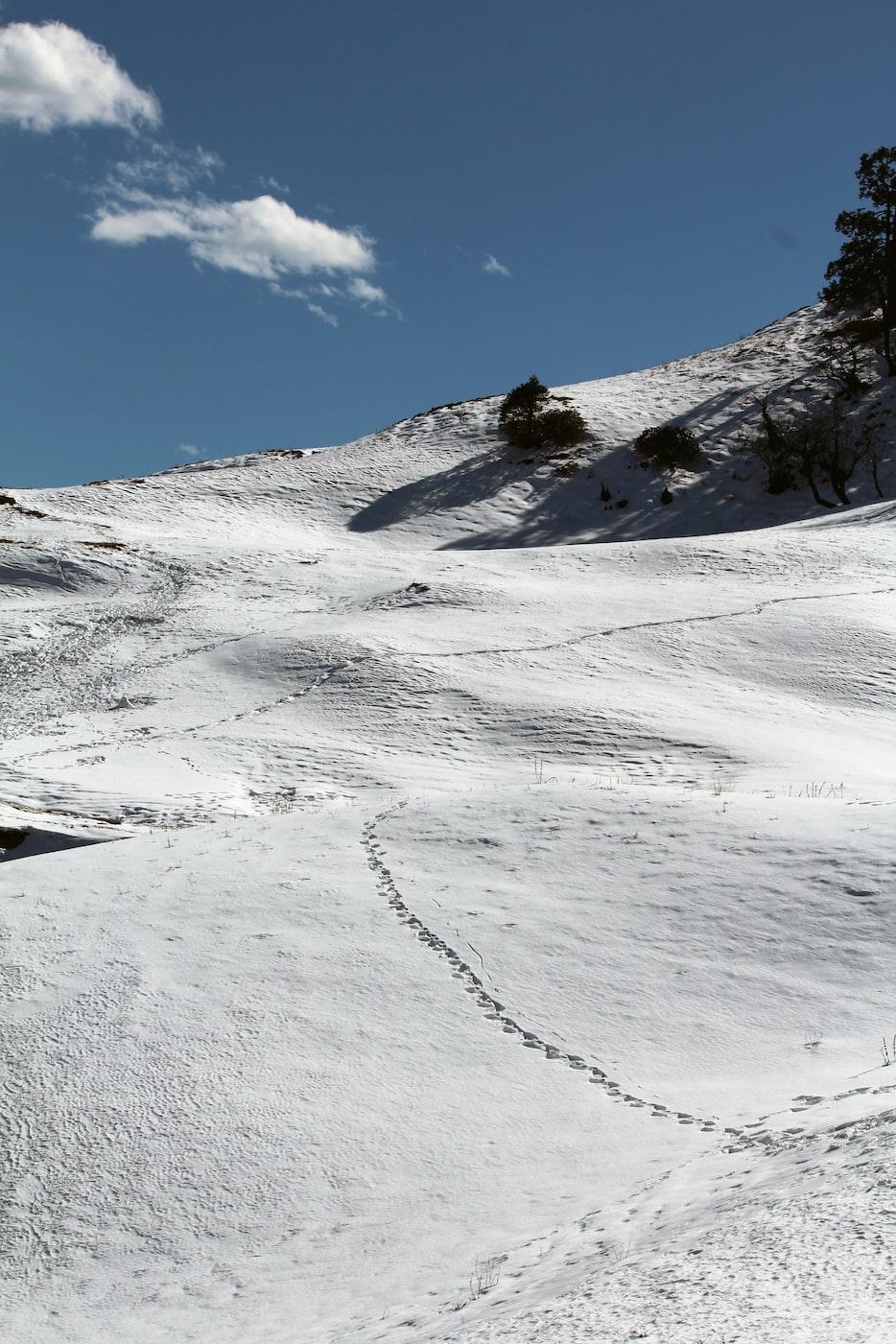 花 植物 花瓣 风景 光线 岩石 水 海洋 蓝色 印度 巴西 冬天 草地 徒步旅行 喜马拉雅山 雪道 雪 徒步旅行 创作共用图像,