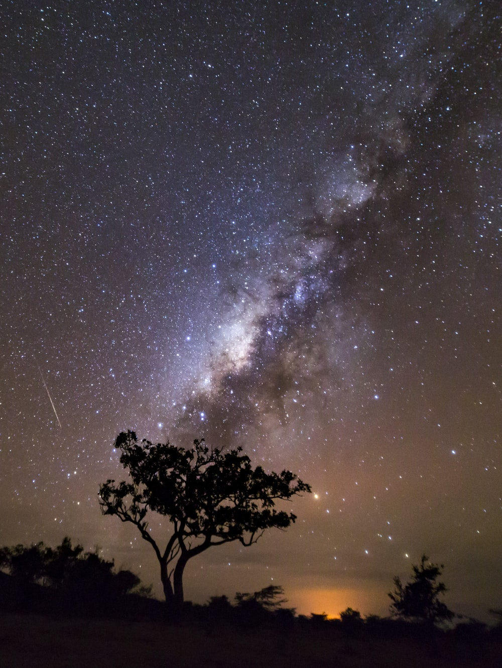 silhouette photo of tree with milky way background