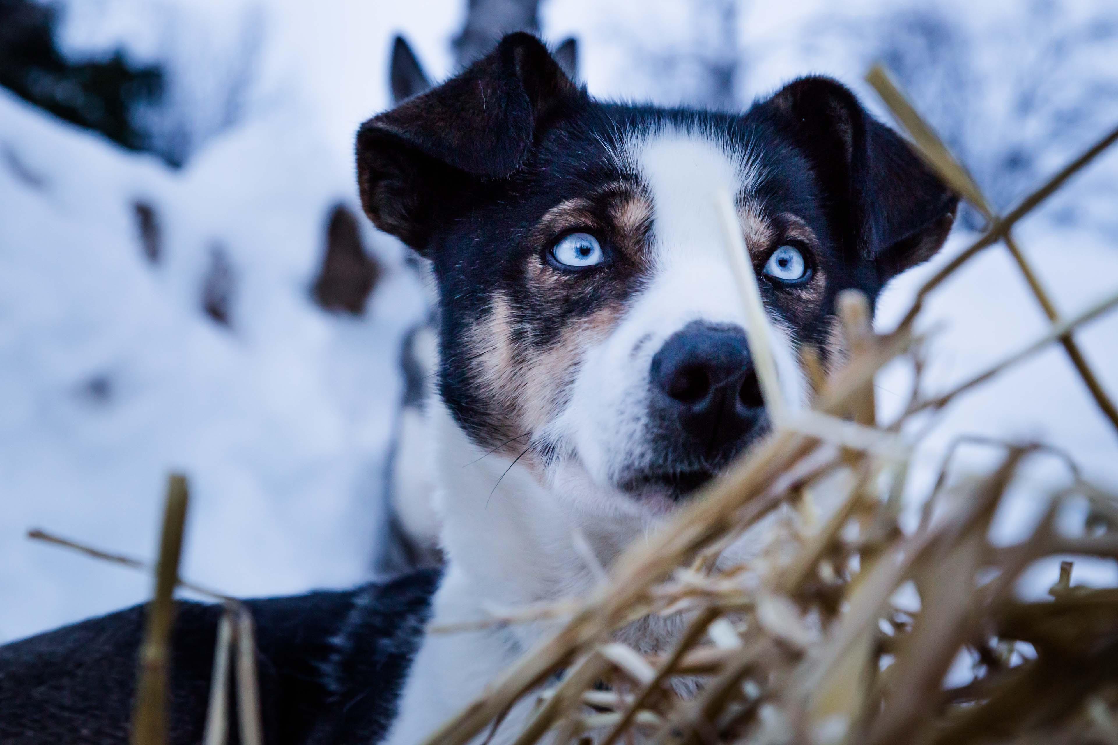 dog near bush