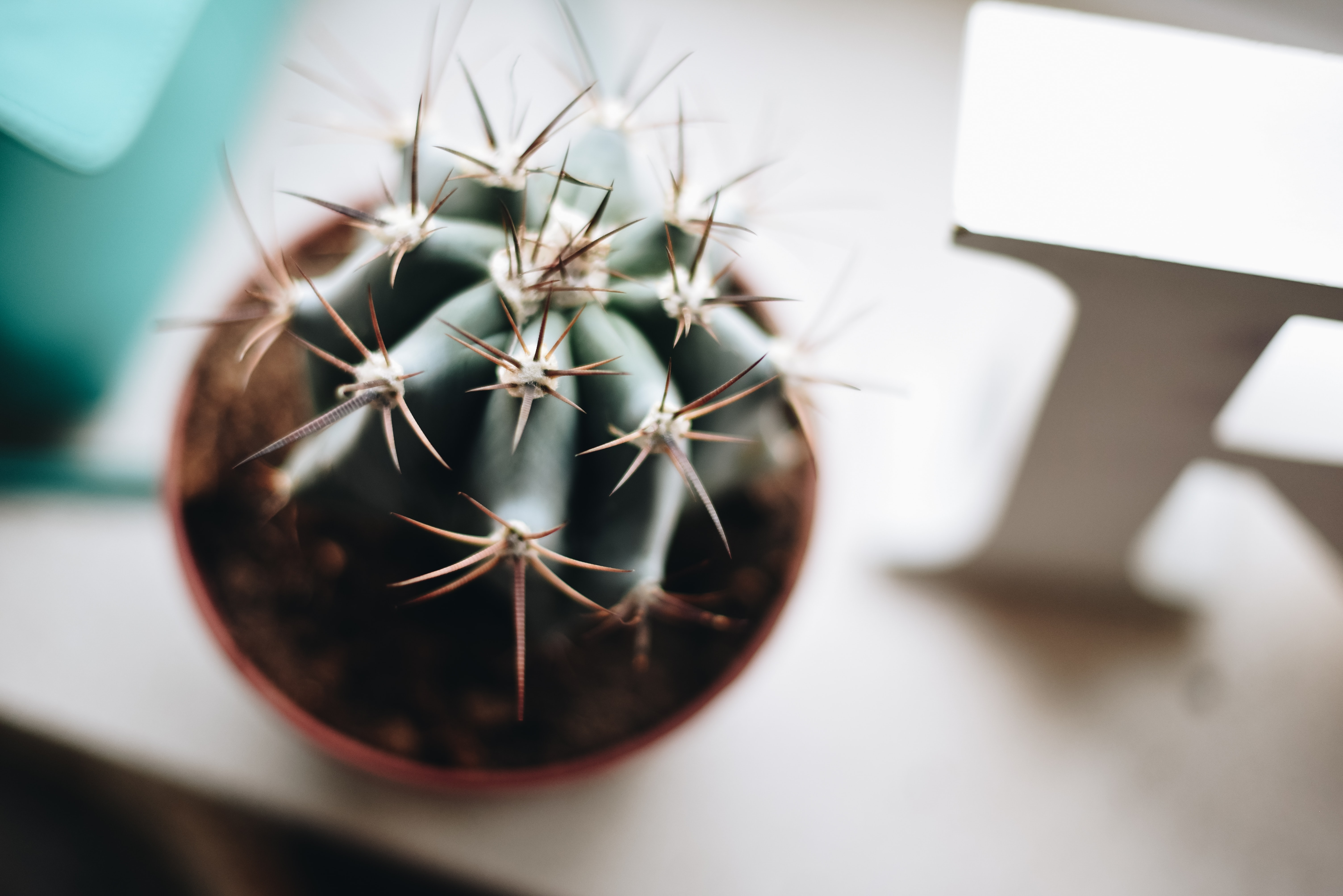 selective-focus photo of cactus plant