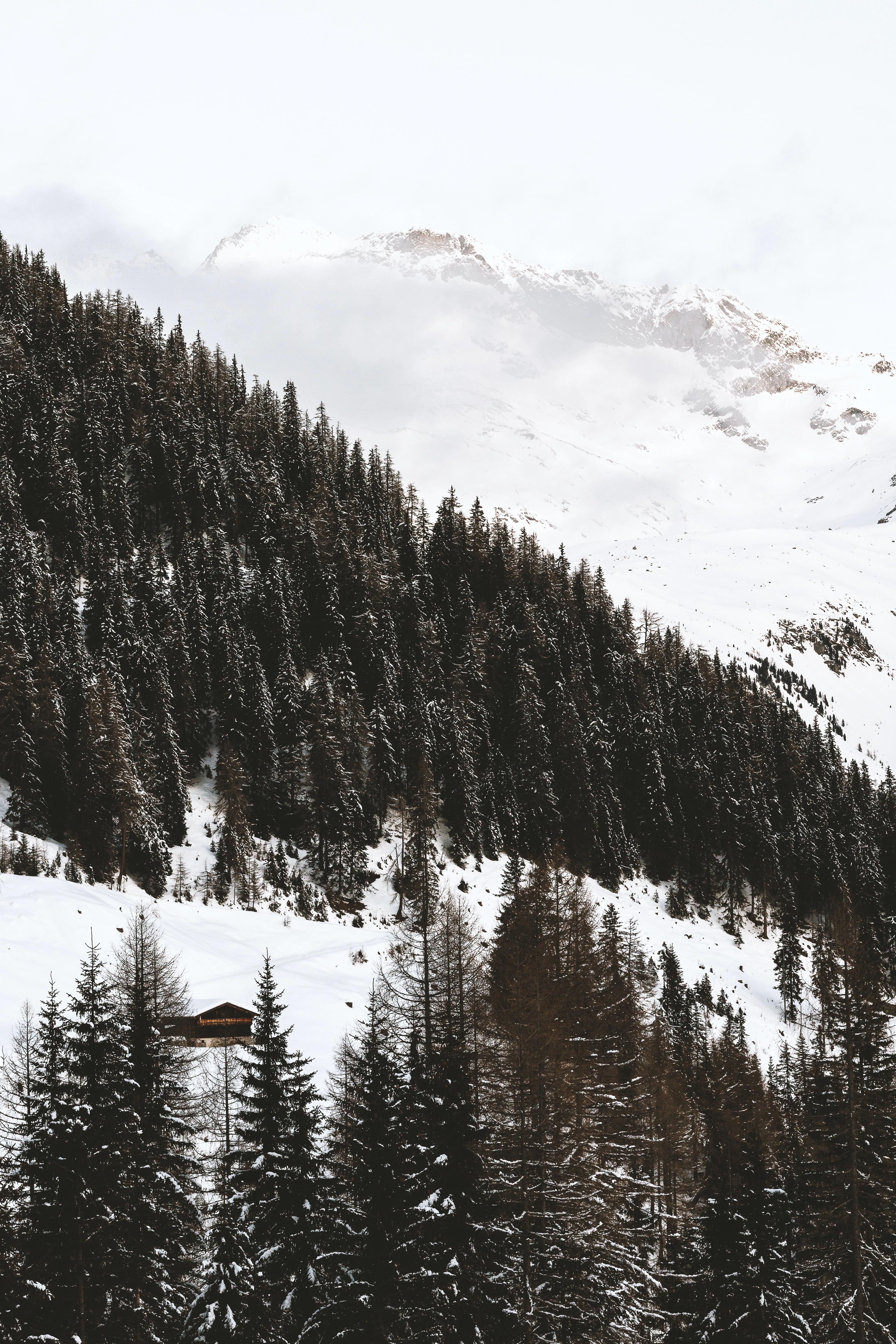 trees on snow field