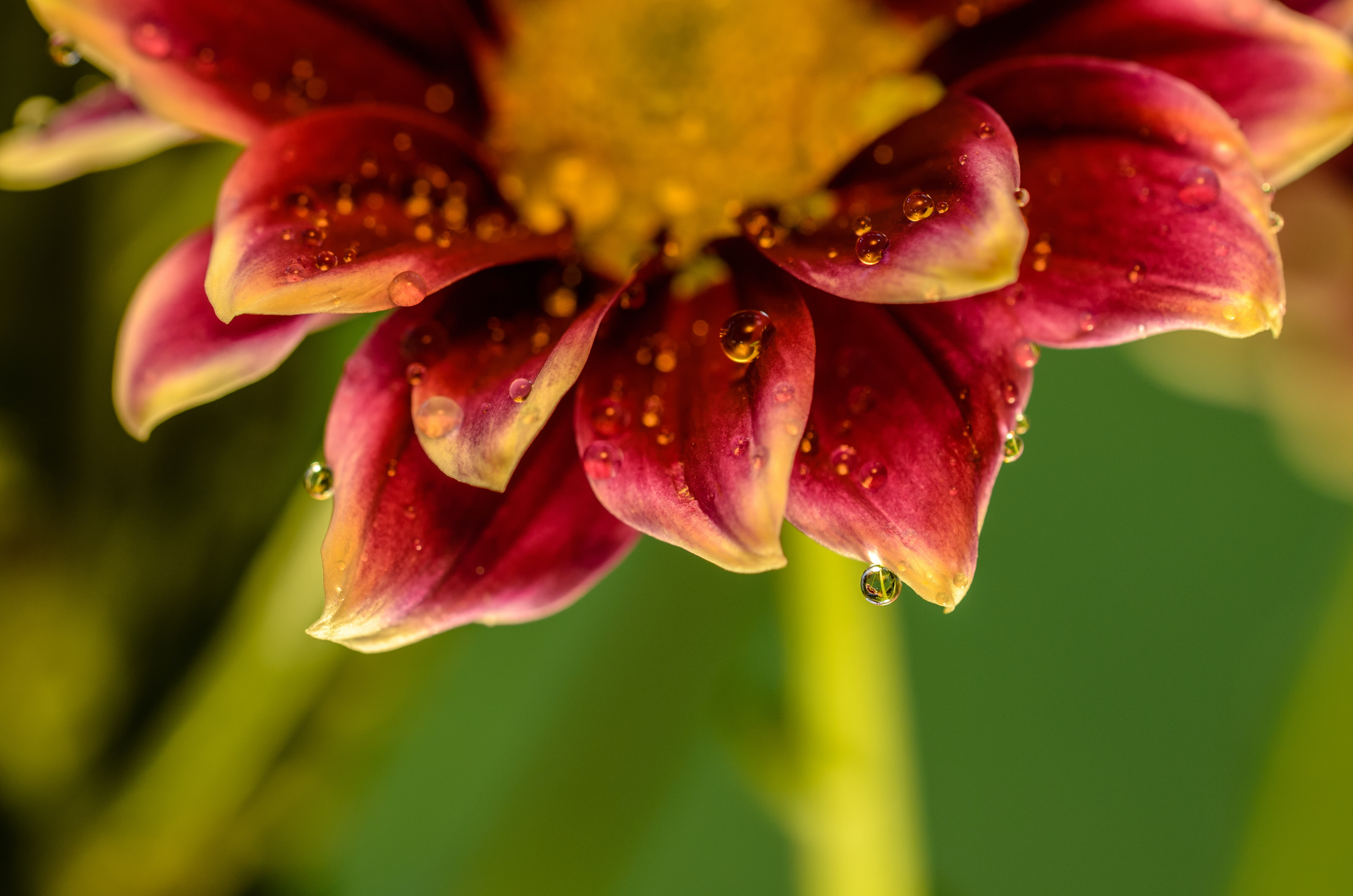 yellow and red flower petals in macro shot photography