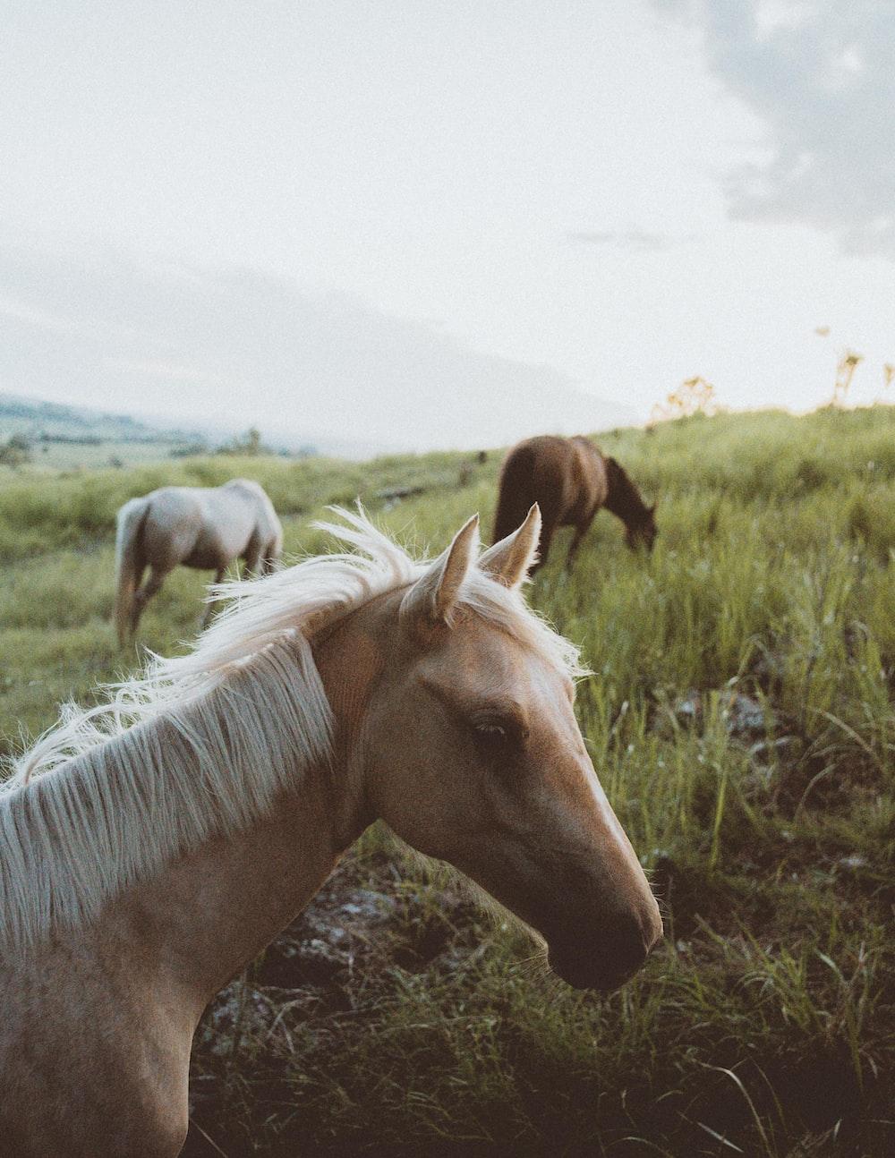 tilt-shift lens photography of horse herd on grassland during daytime
