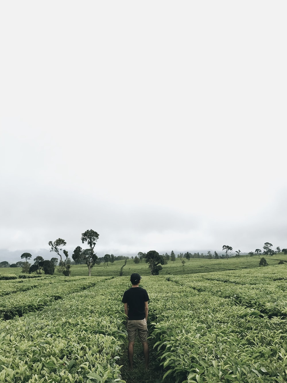 man standing in the middle of plant field