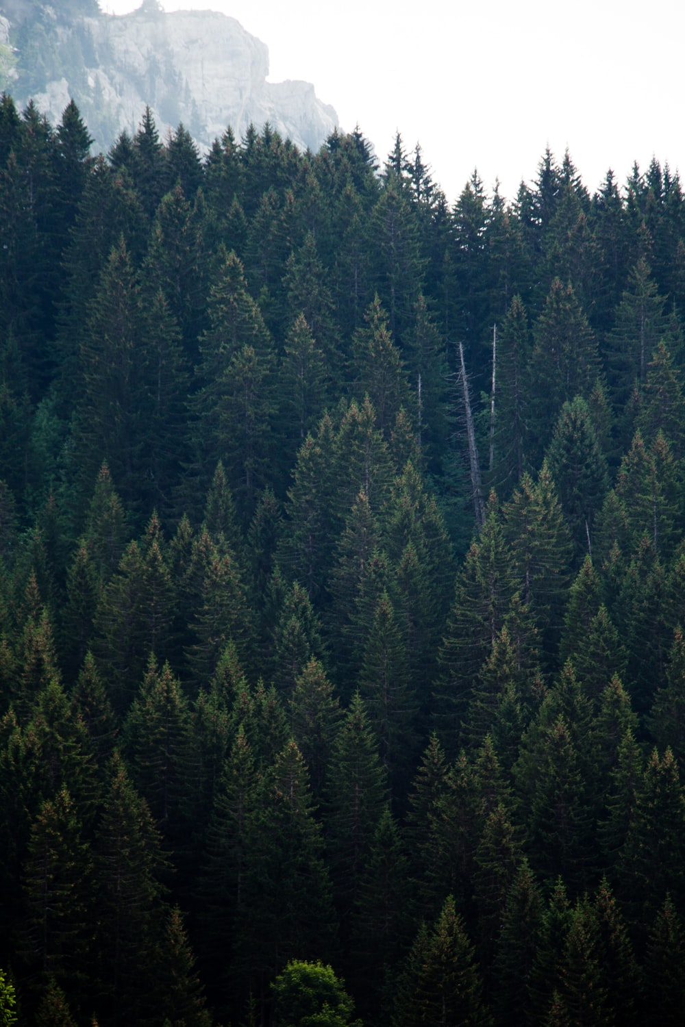 bird's eye photography of forest