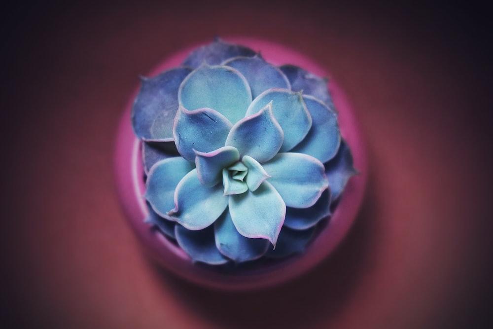 photo of succulent plant