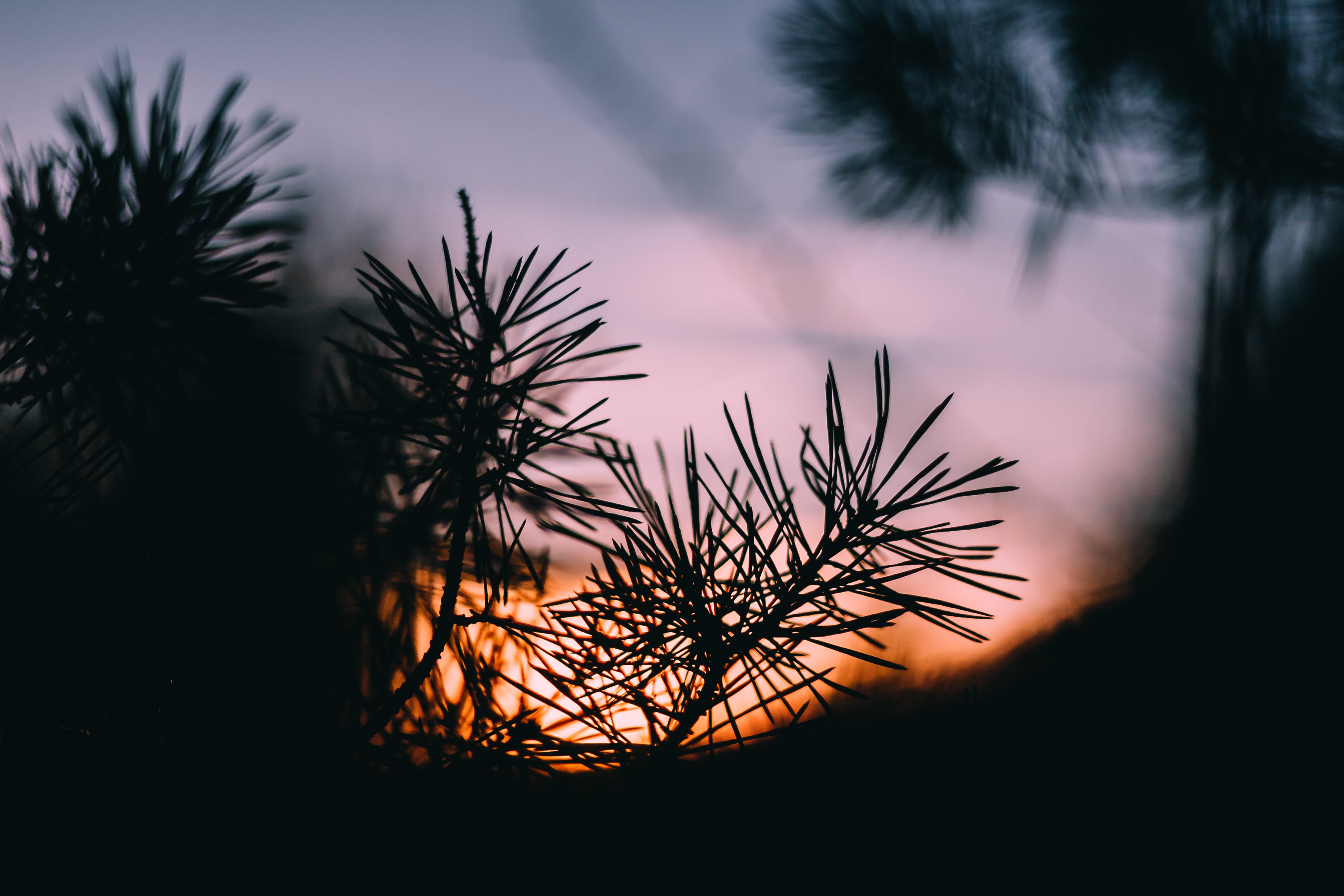 silhouette of plant during golden hour