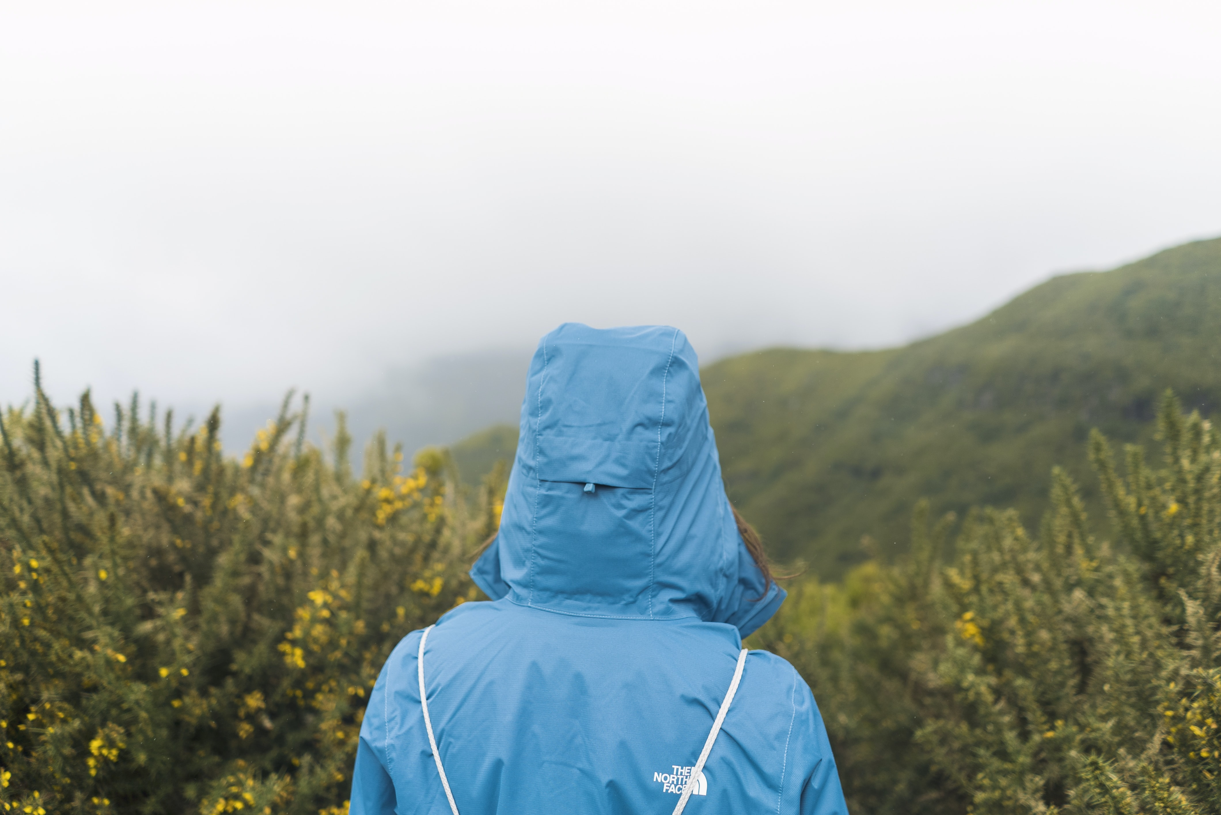 person in blue hoodie staring at green field