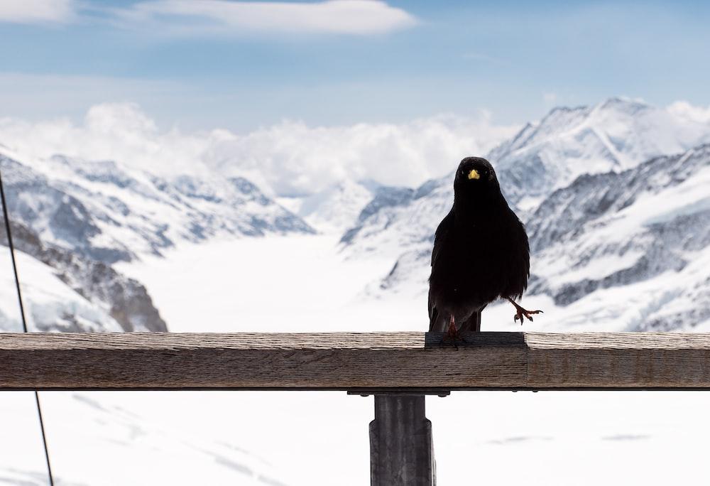 bird on handrail during daytime