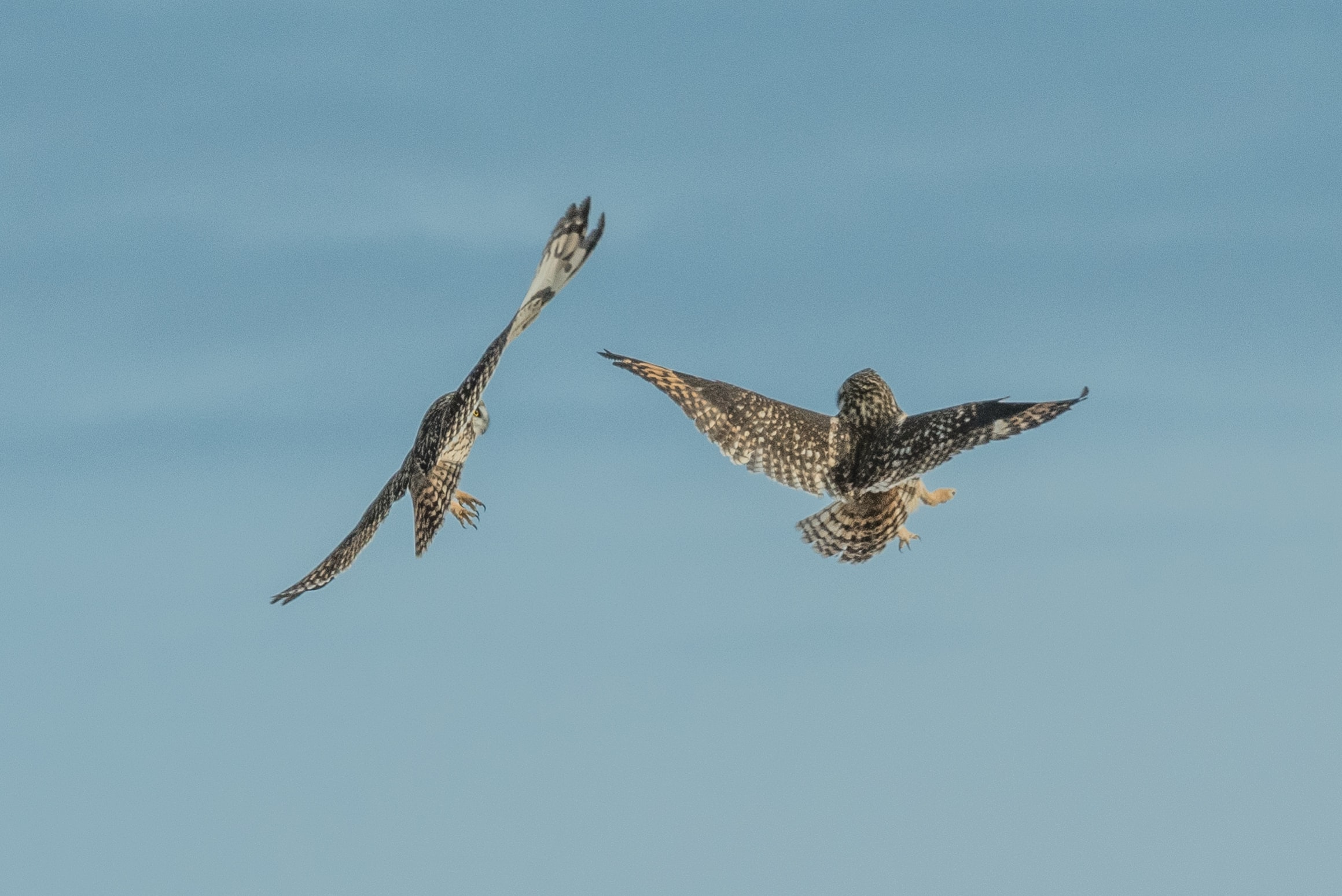 two birds flying during daytime