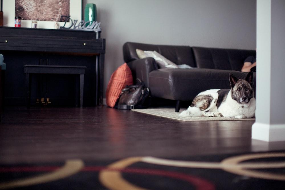 dog on mat near sofa bed