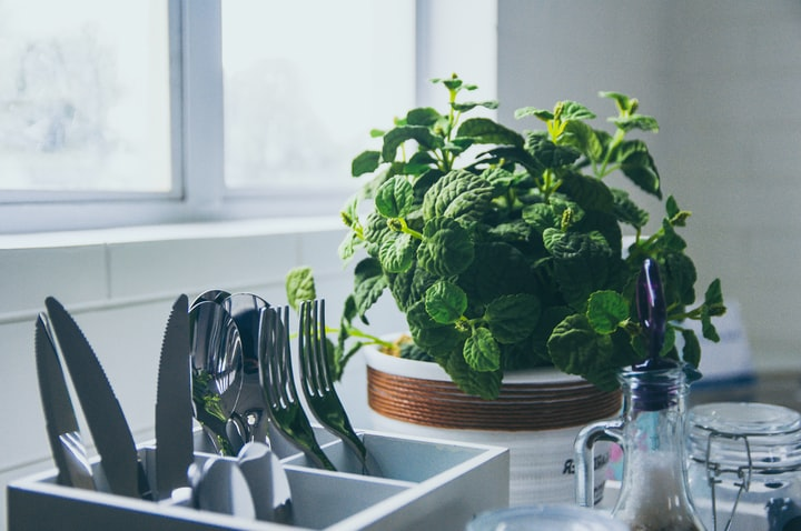5 Culinary Herbs You Can Easily Grow on Your Balcony
