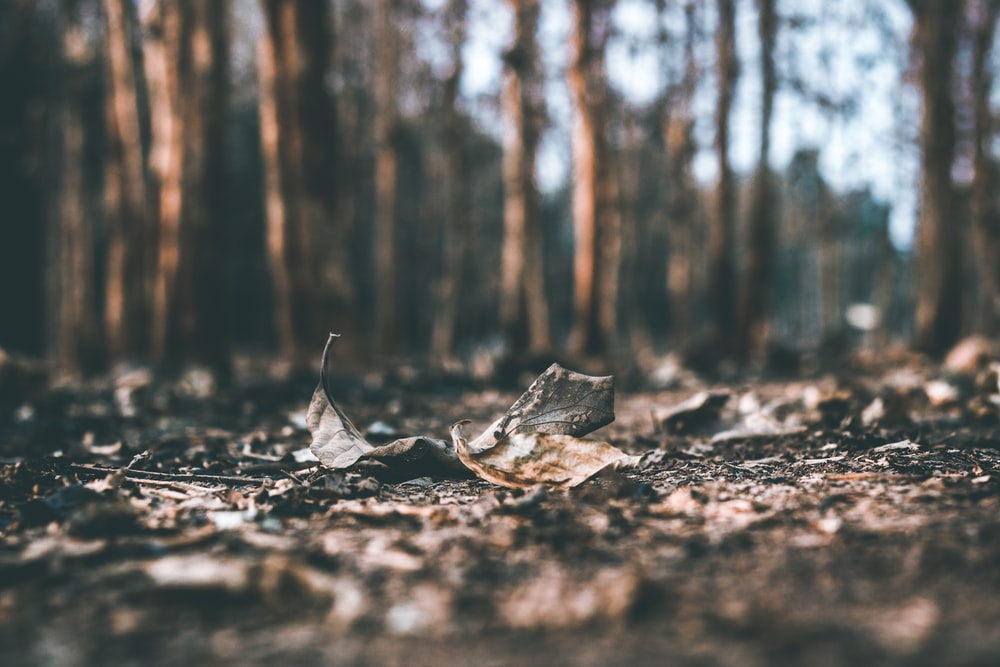 selective focus photography of dried leaves