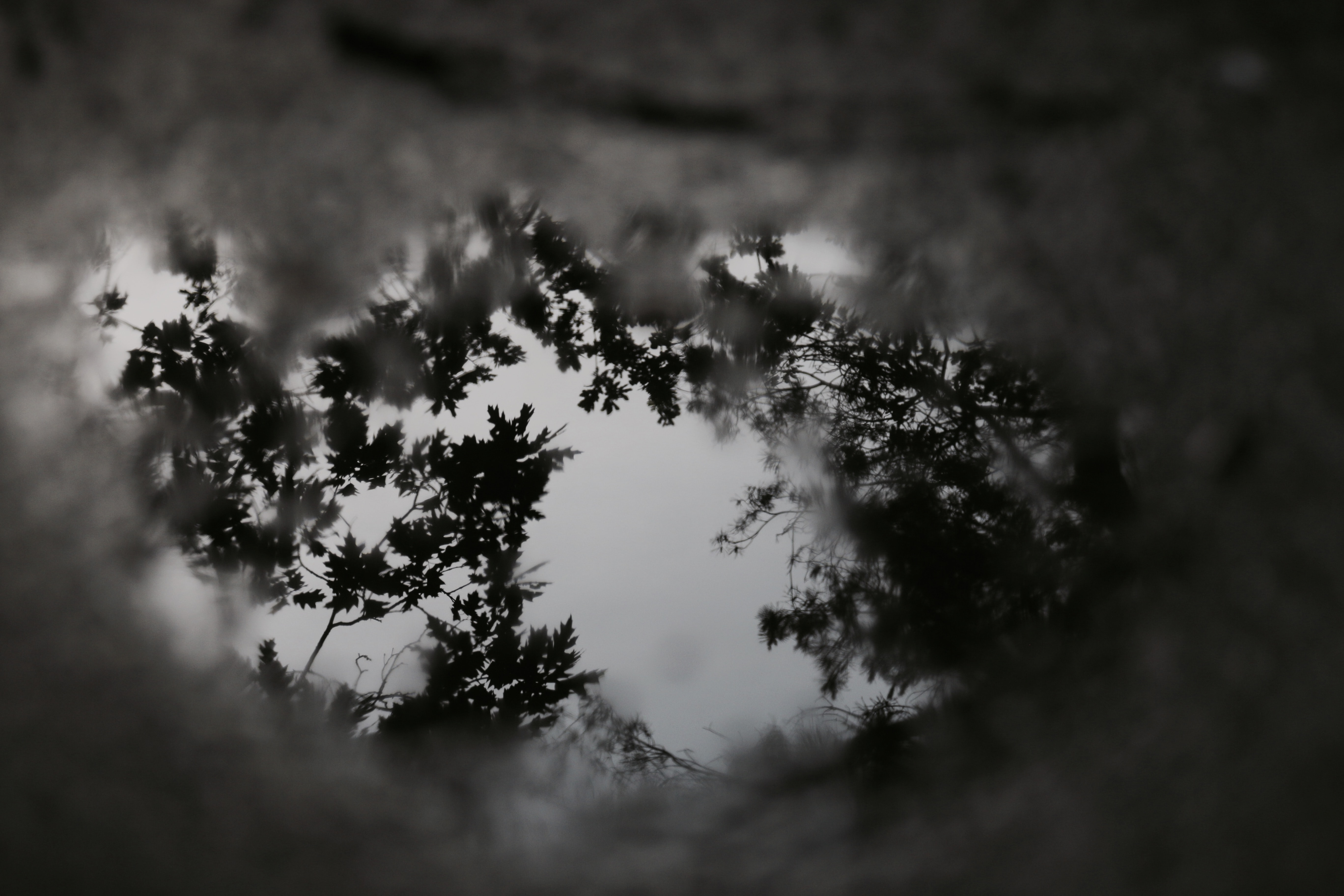 selective focus photography of trees