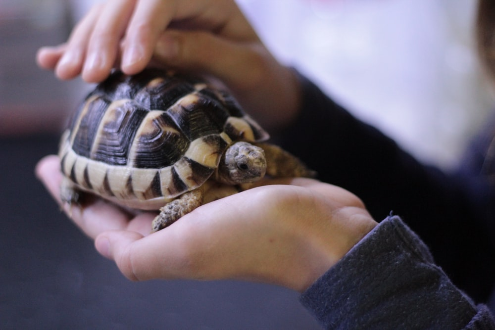 person holding turtle