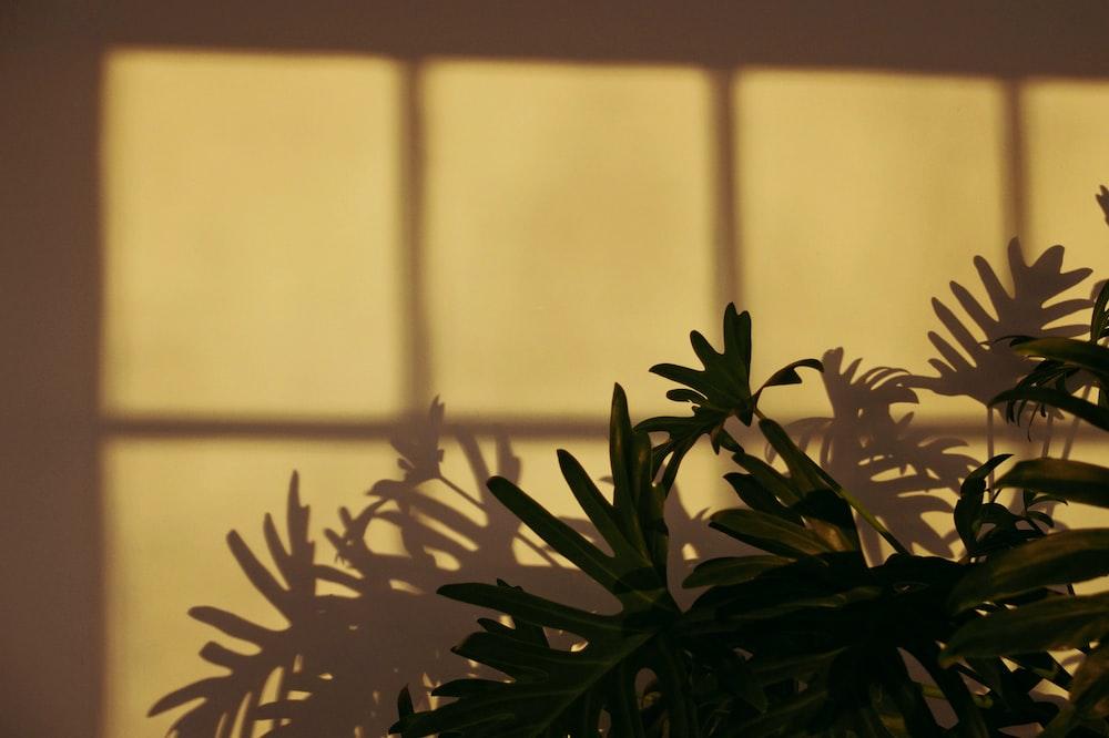 green leafed plant near beige wall
