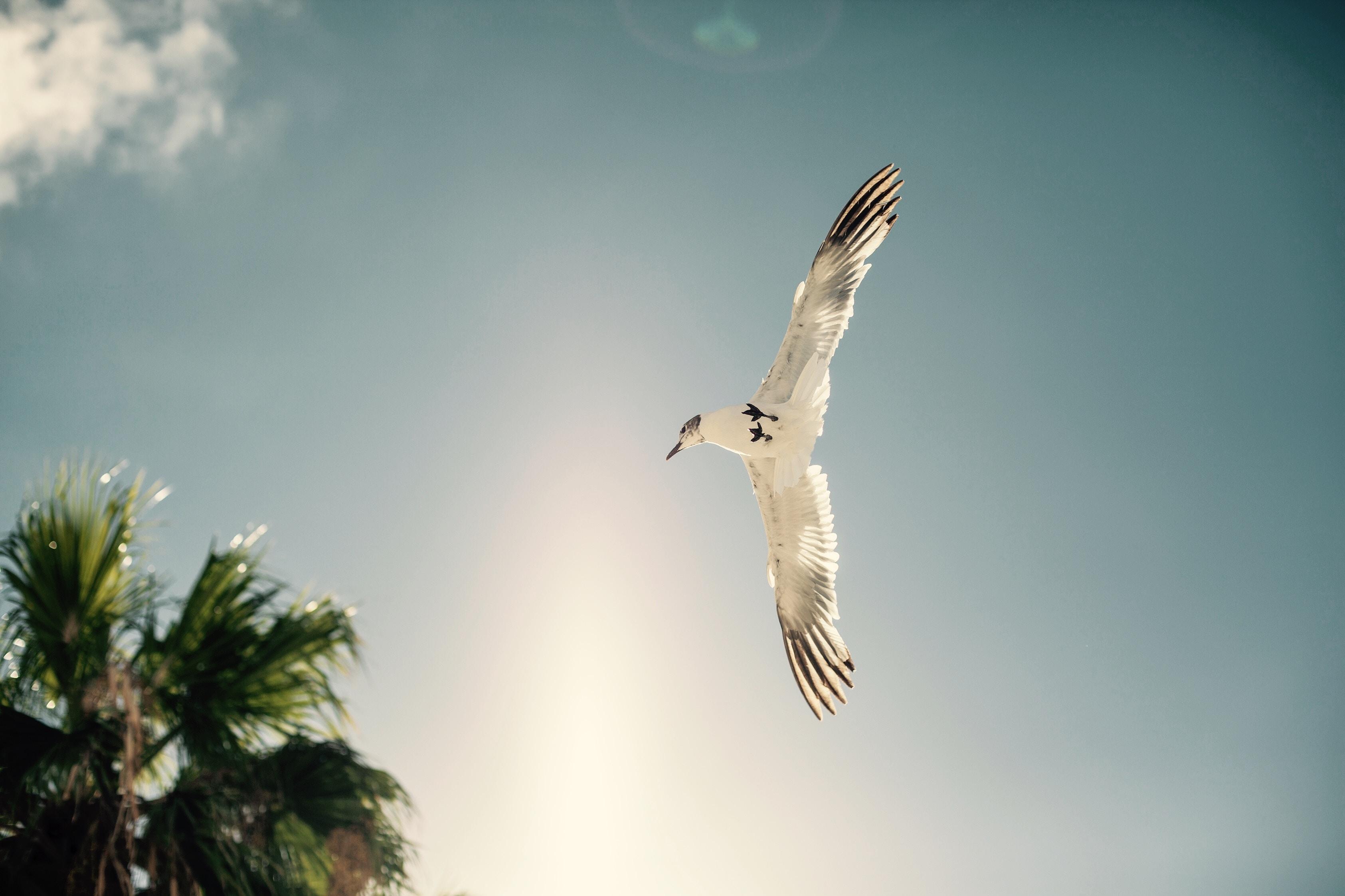 white bird soaring near tree during daytime