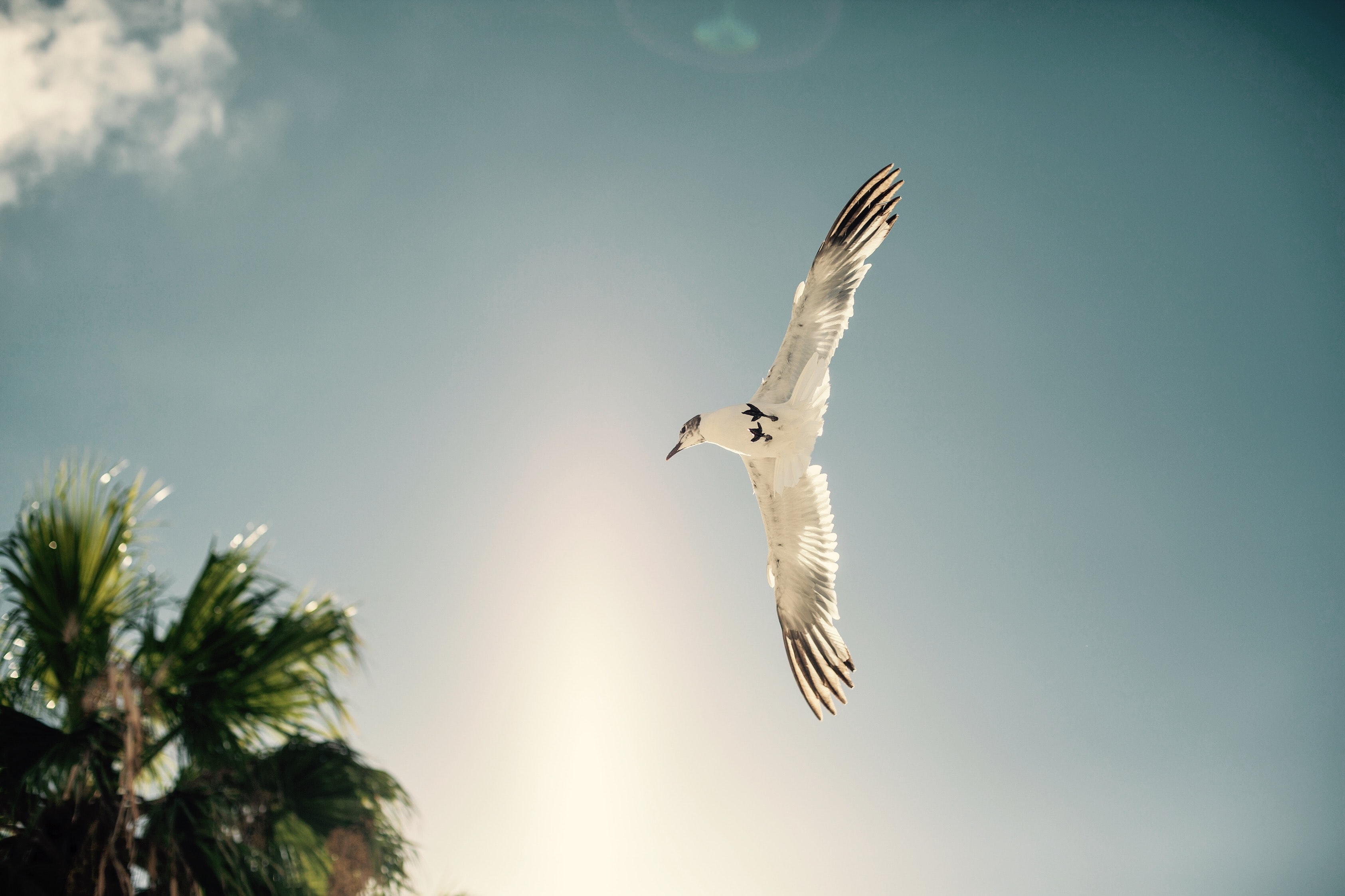 white bird soaring near tree during daytime