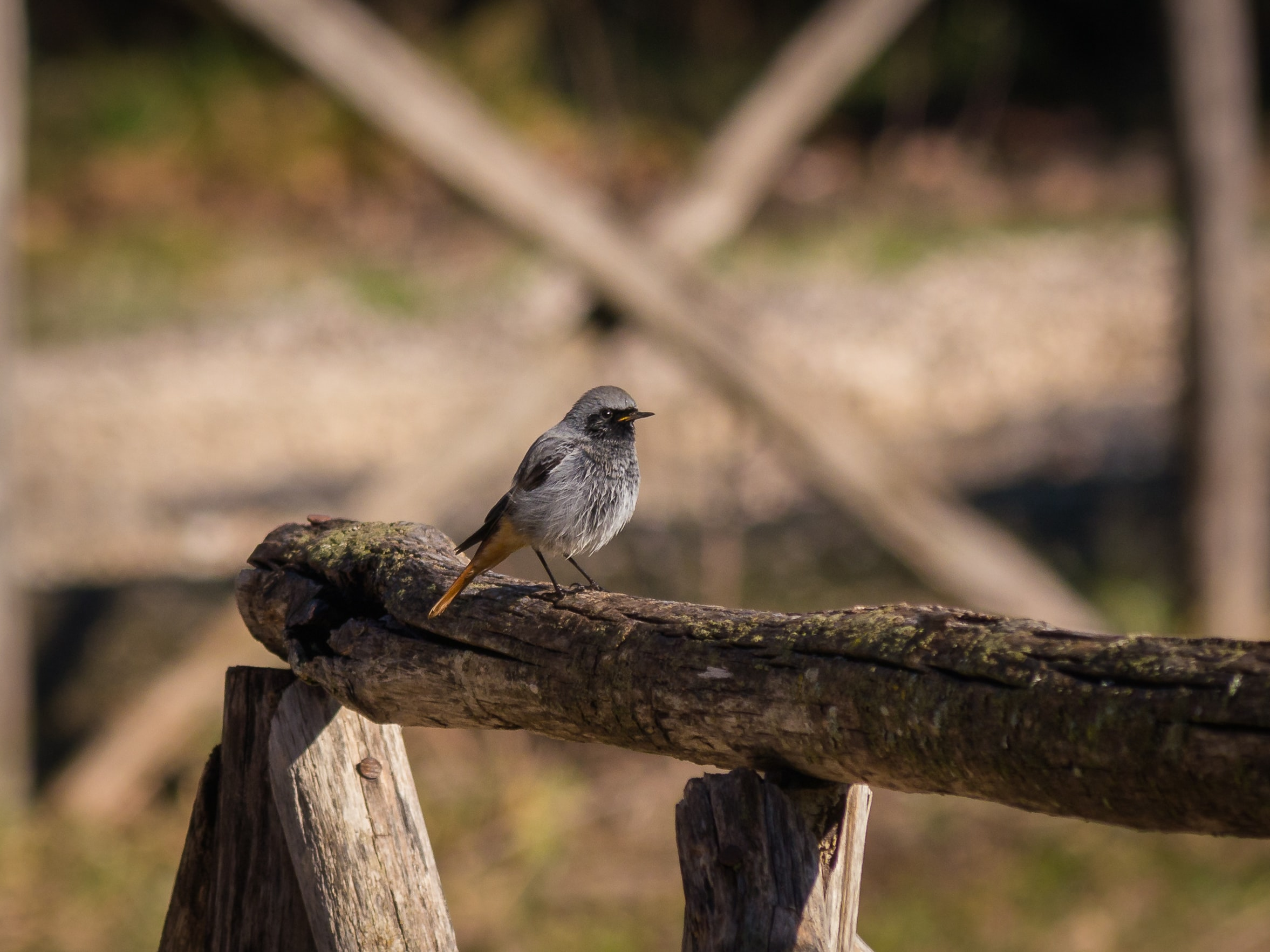 focus photo of gray bird on brown wood during daytime