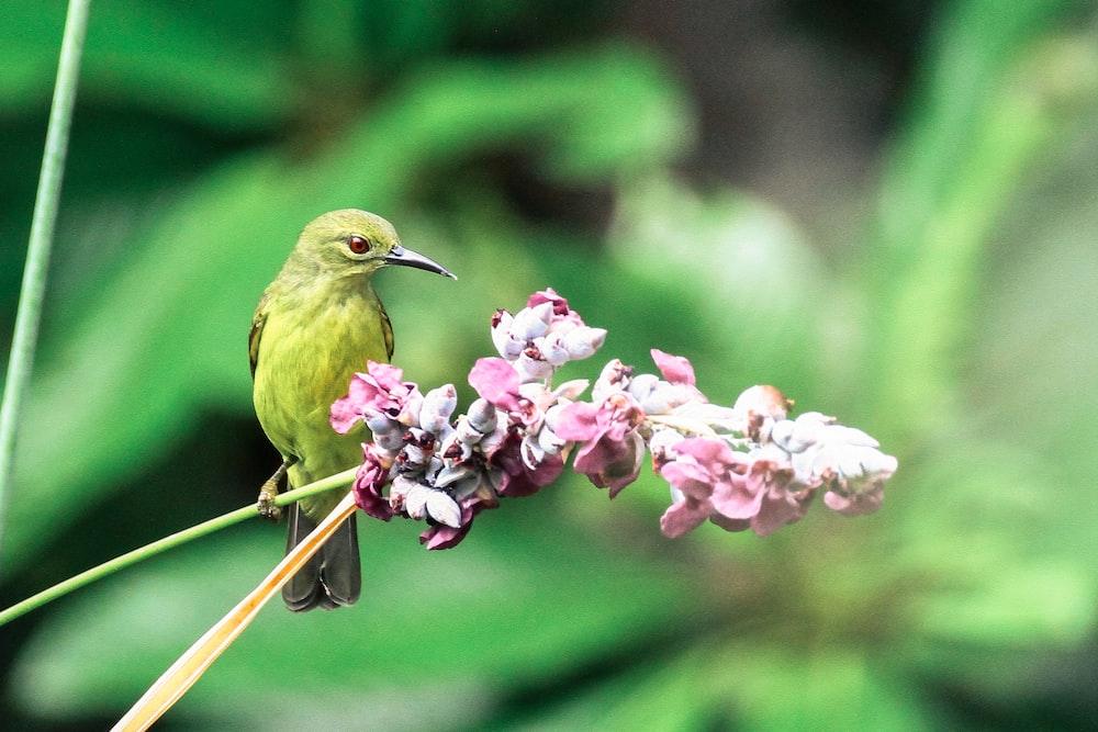 green bird beside the pink flower