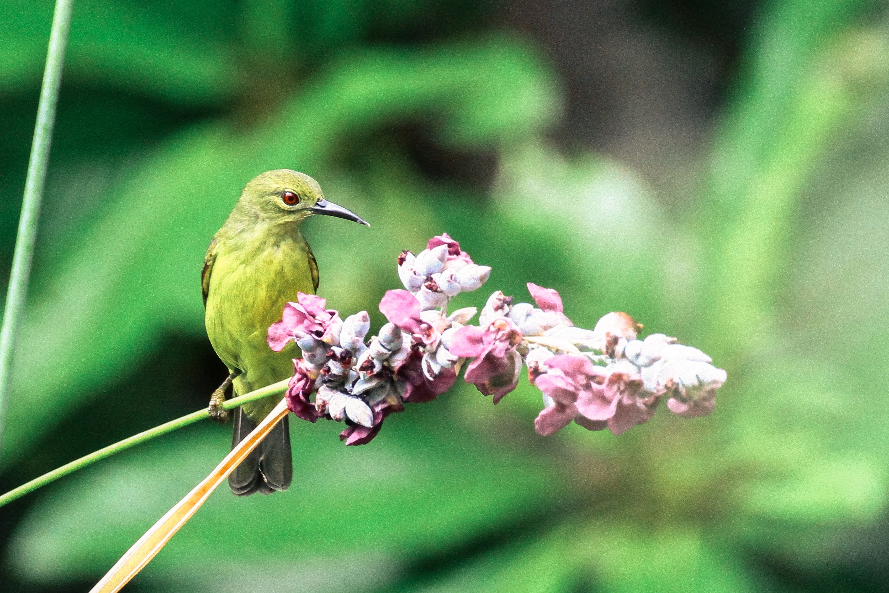 green bird beside the pink flower