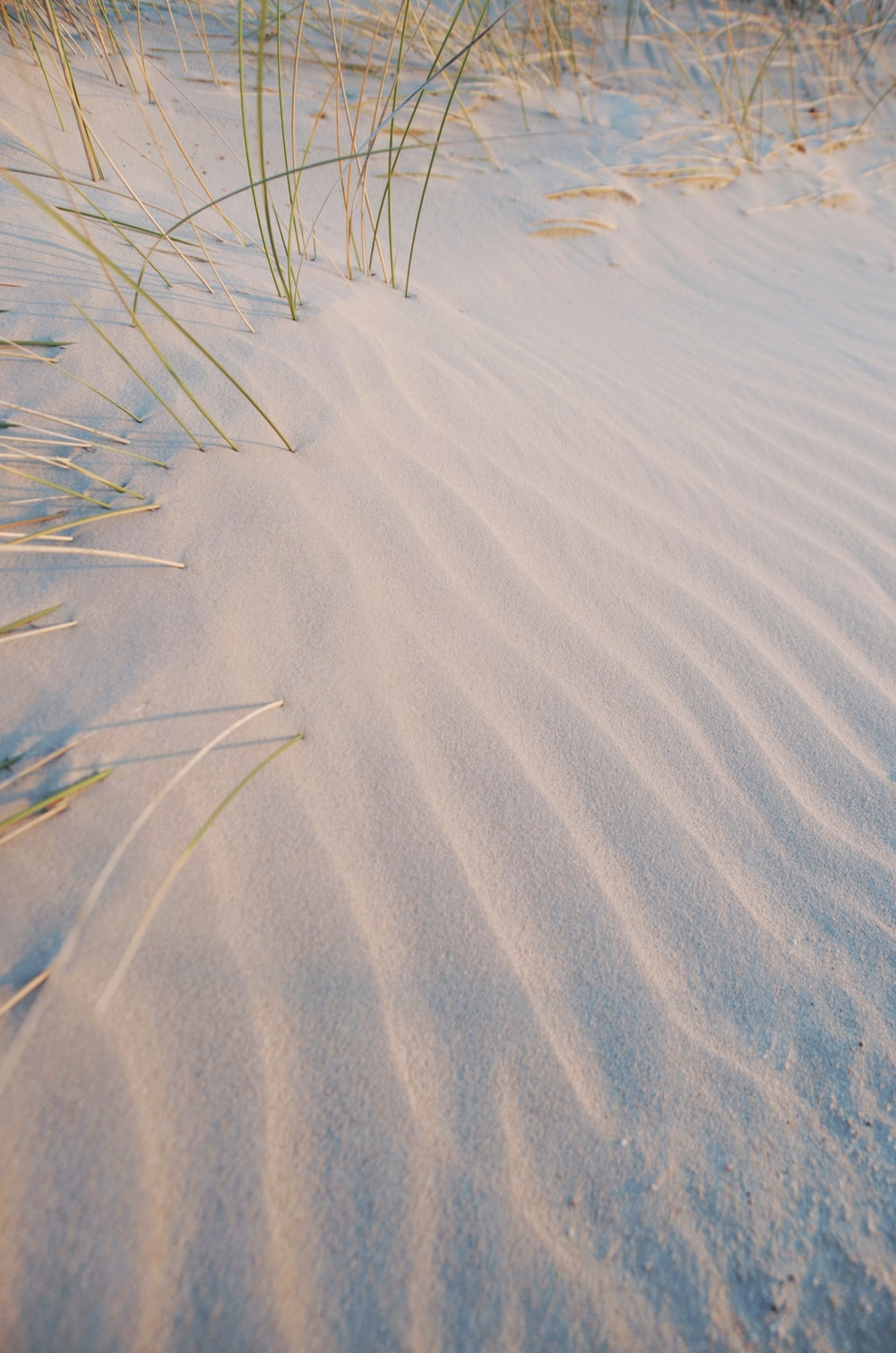 white sand and green linear plant