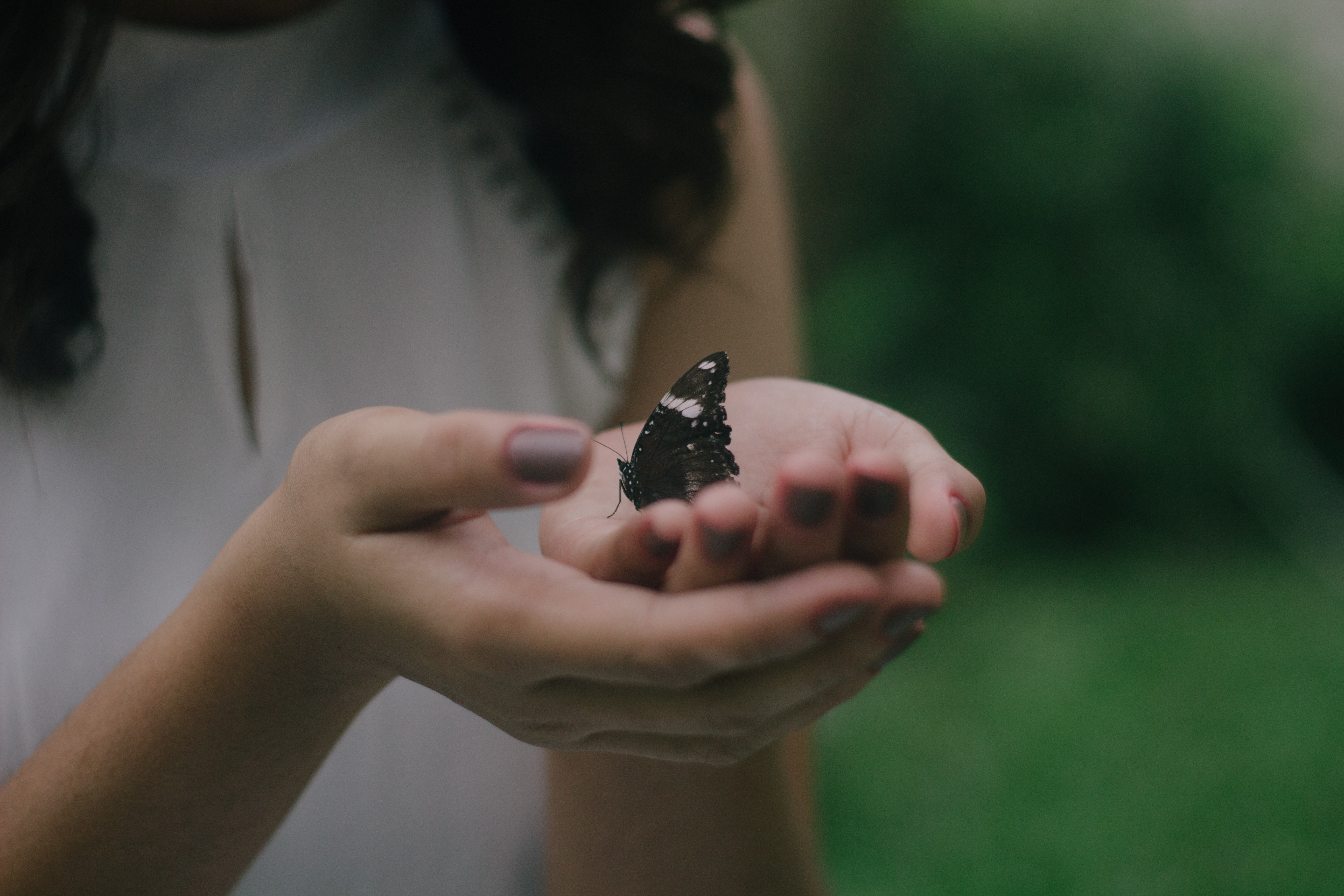 black butterfly on woman's palm