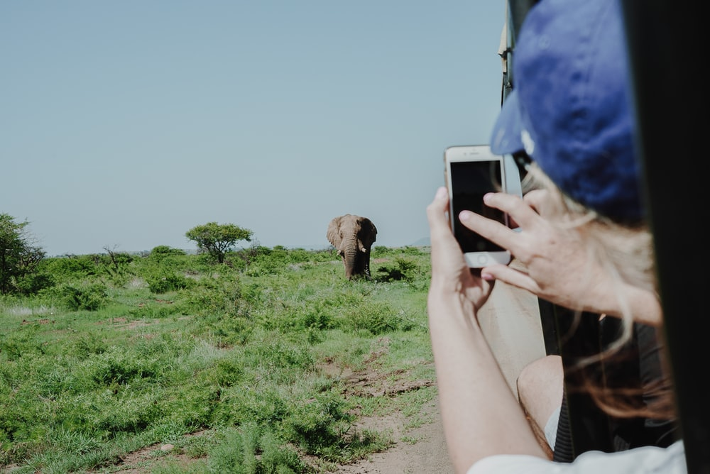 person holding smartphone taking photo of brown elephant