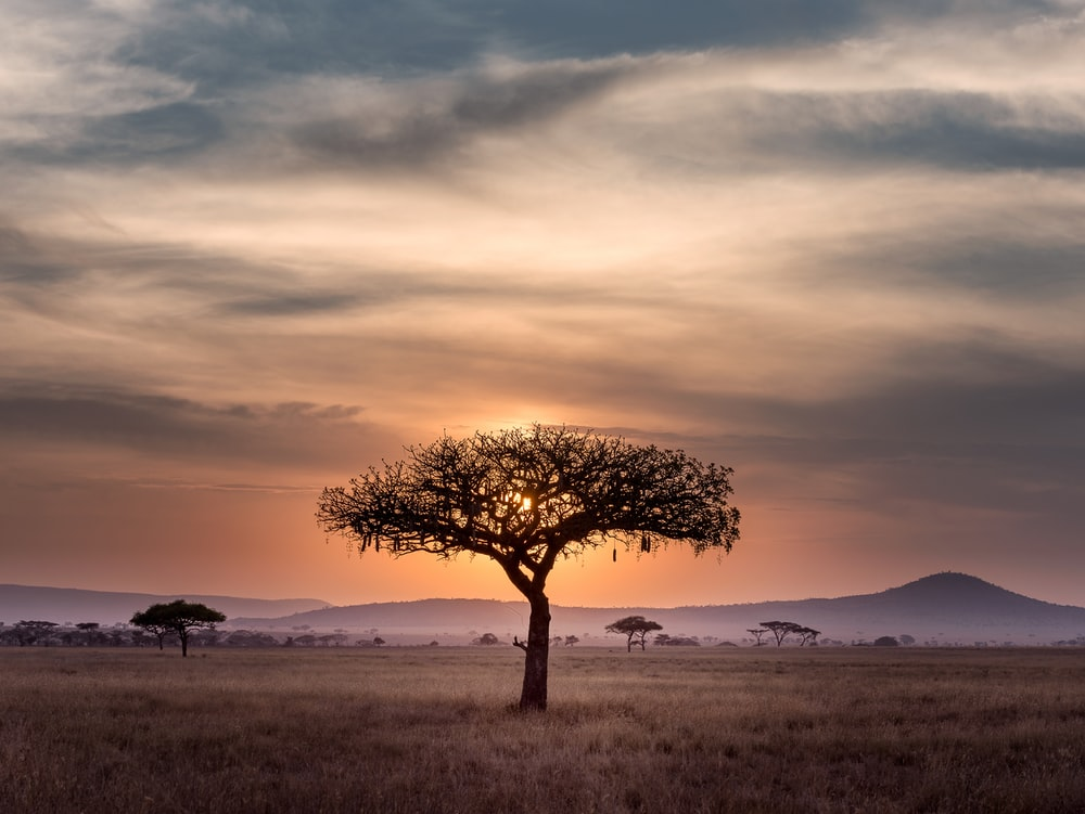 brown tree on surrounded by brown grass during golden hour