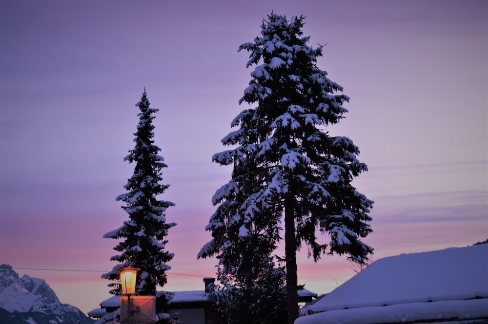 snow covered pine tree beside house during daytime