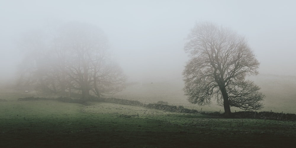 photo of bare tree covered with fog