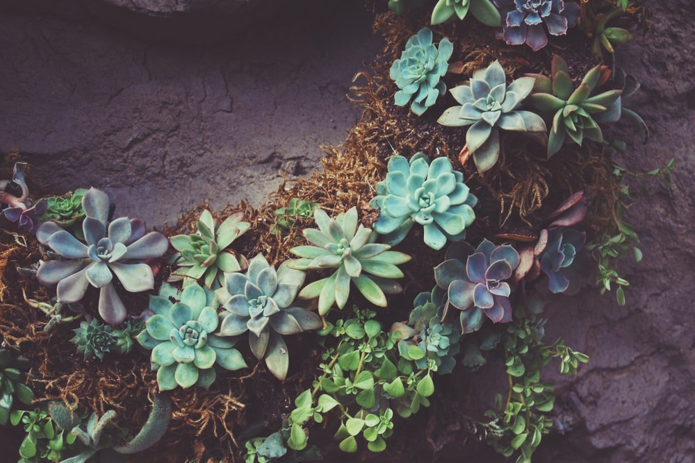 shallow focus photography of green succulent plants top-view photography