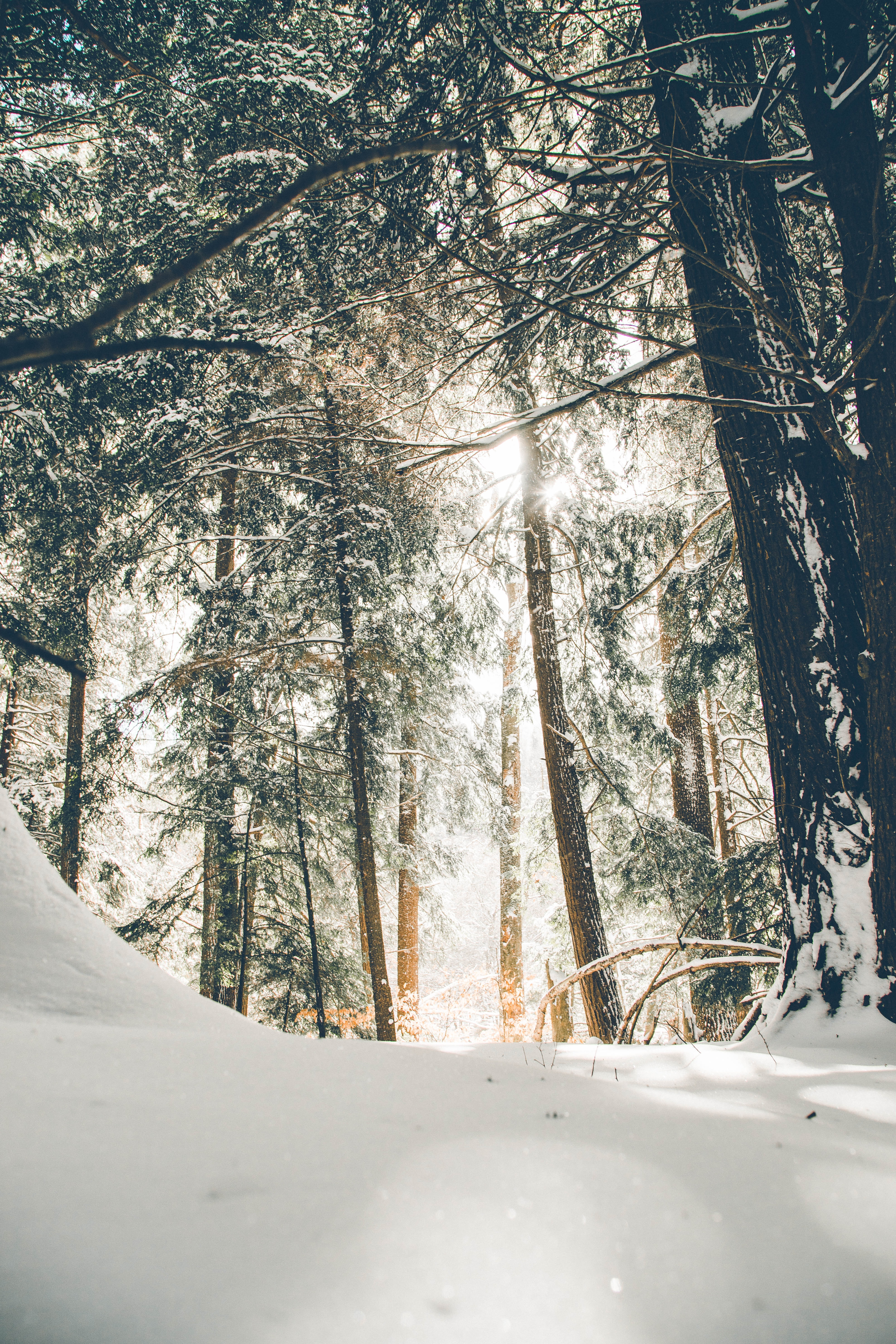 Winter Trees Wallpapers on