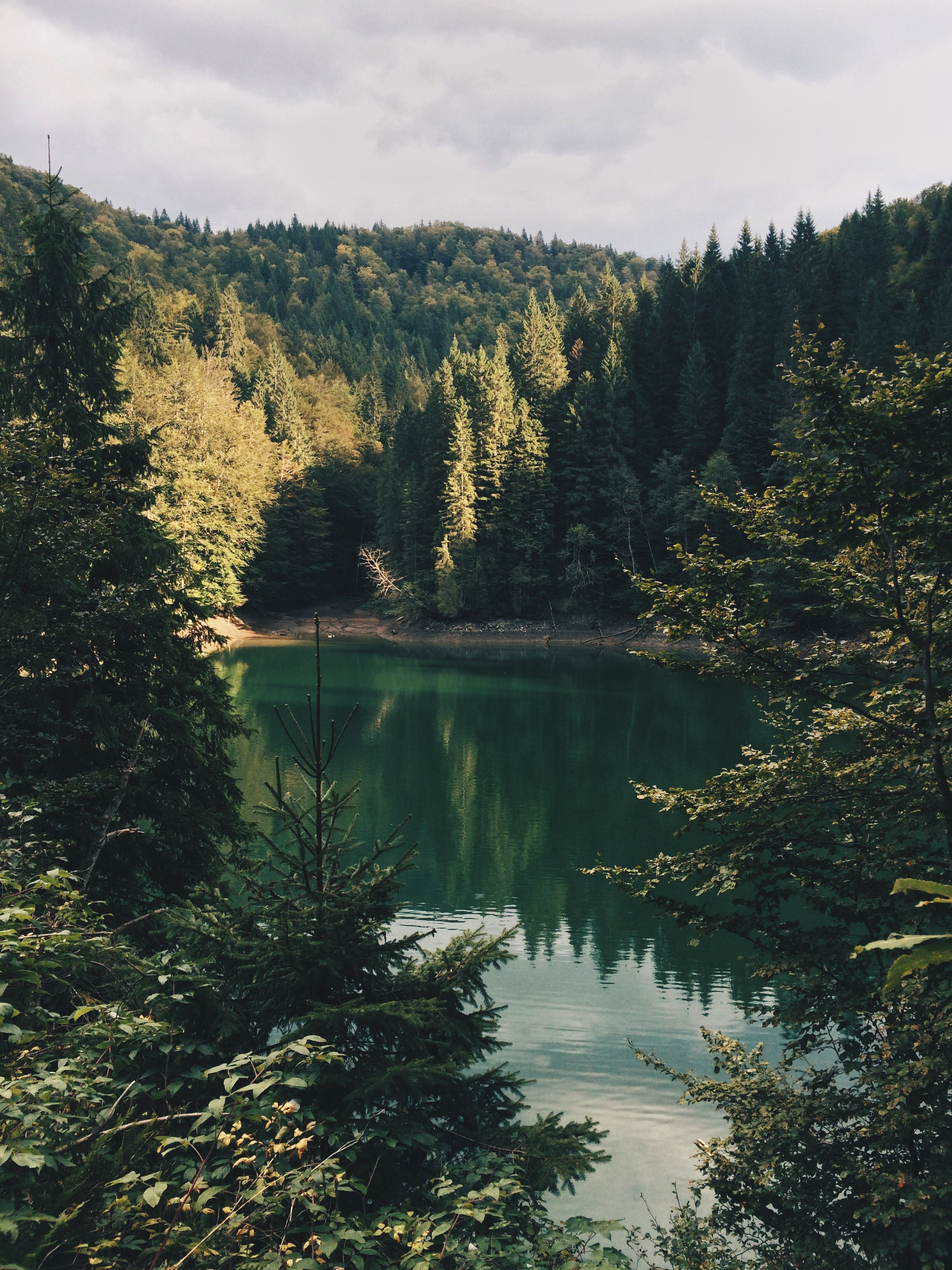 body of water surrounded by trees during daytime