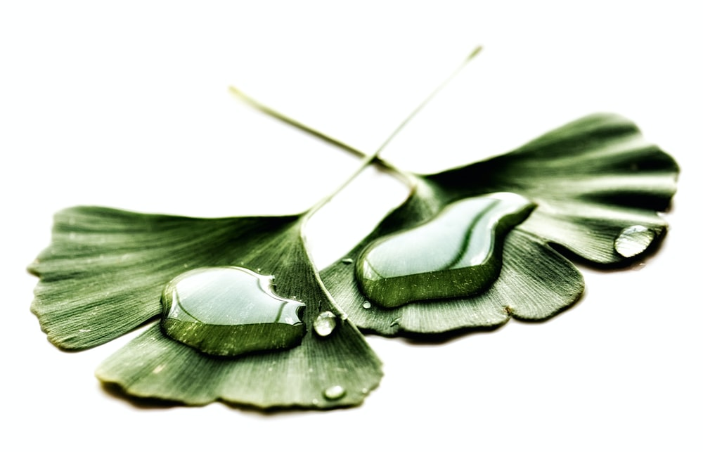 water drops on two green leaves